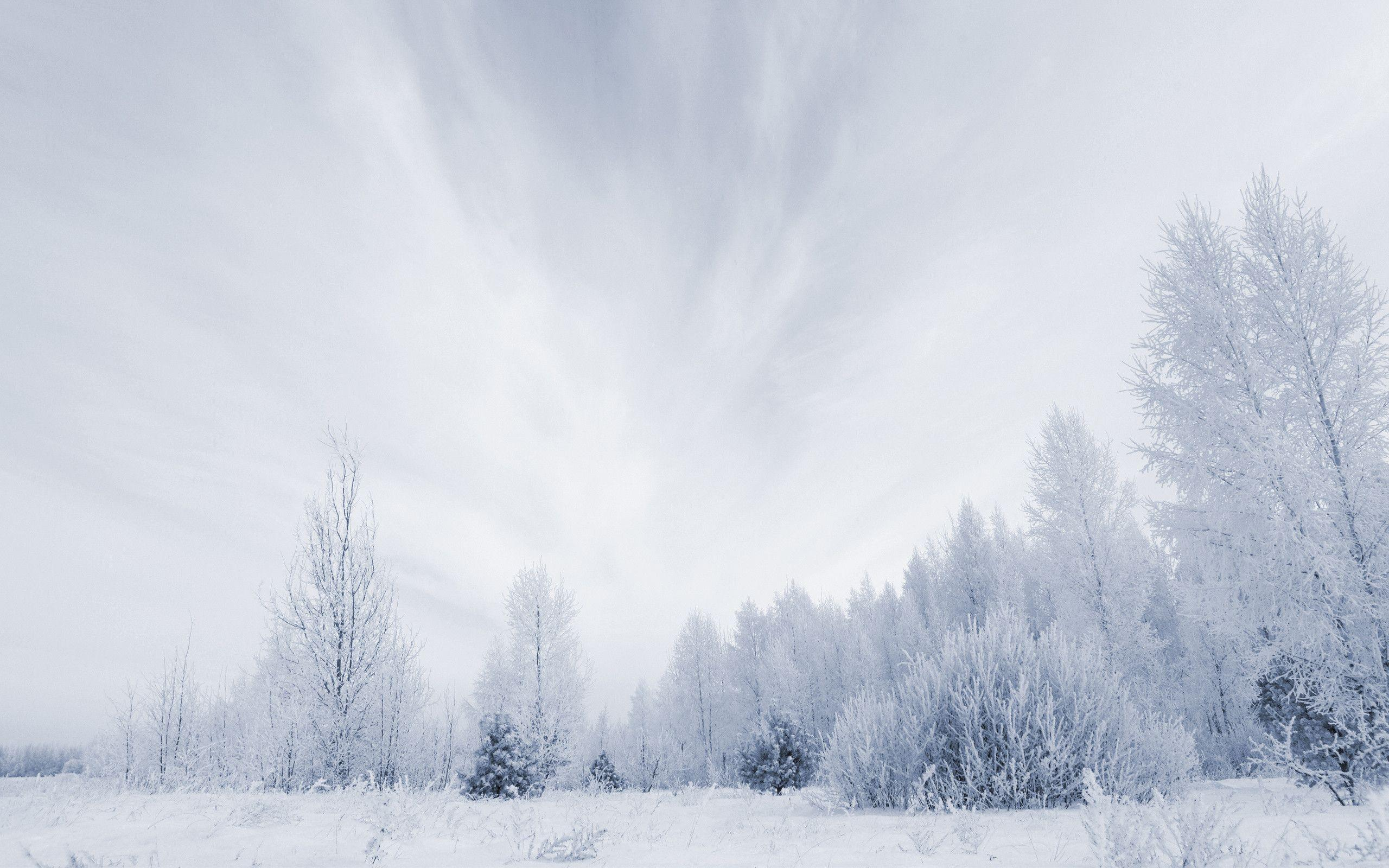snowy nature wallpaper - photo #19