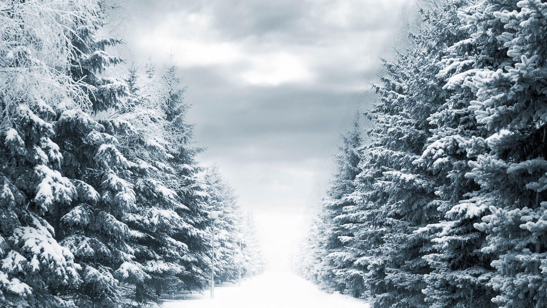Winter Tree Wallpapers Wallpaper