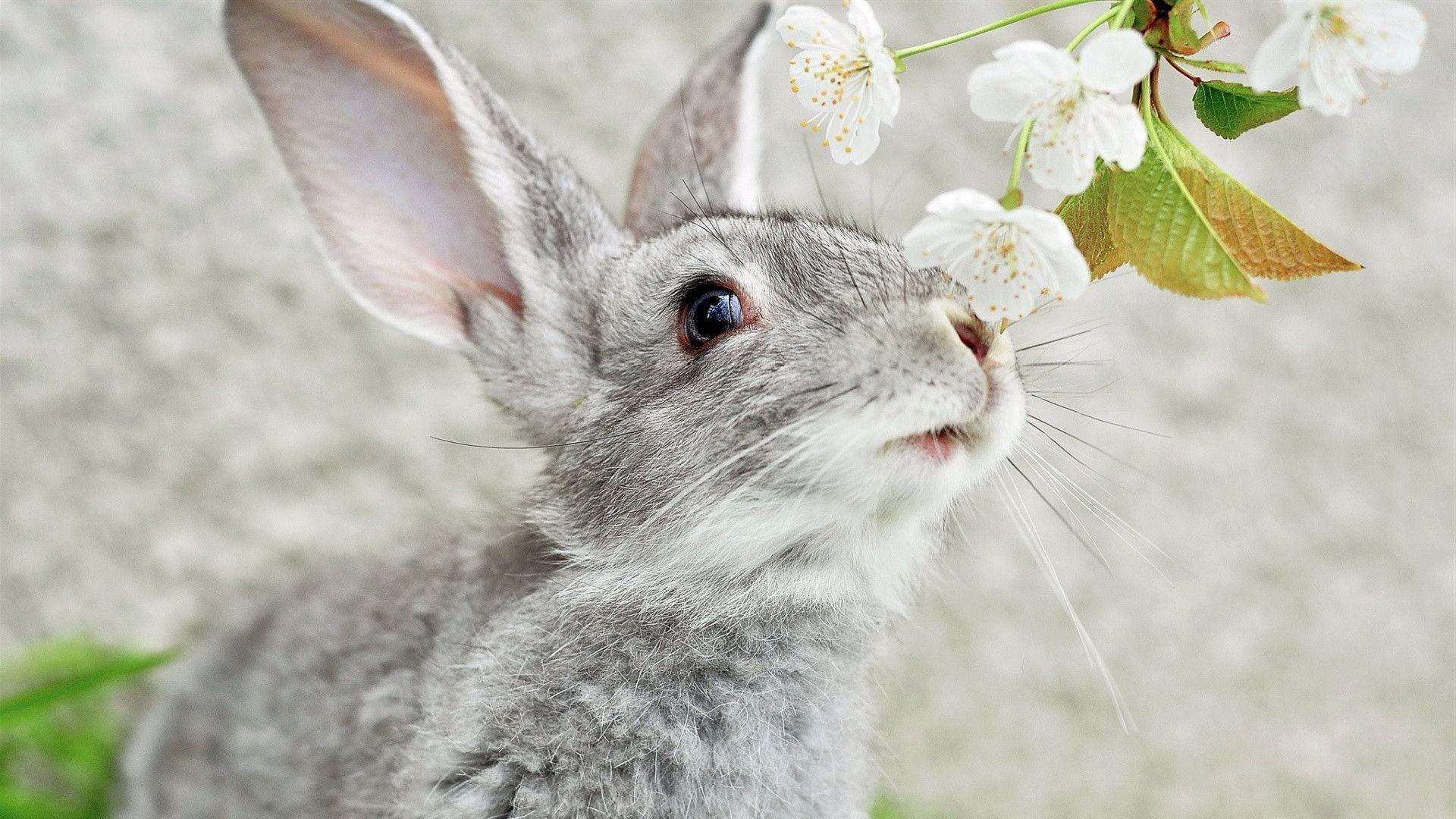 Rabbit wallpapers wallpaper cave for Animal wallpaper for walls