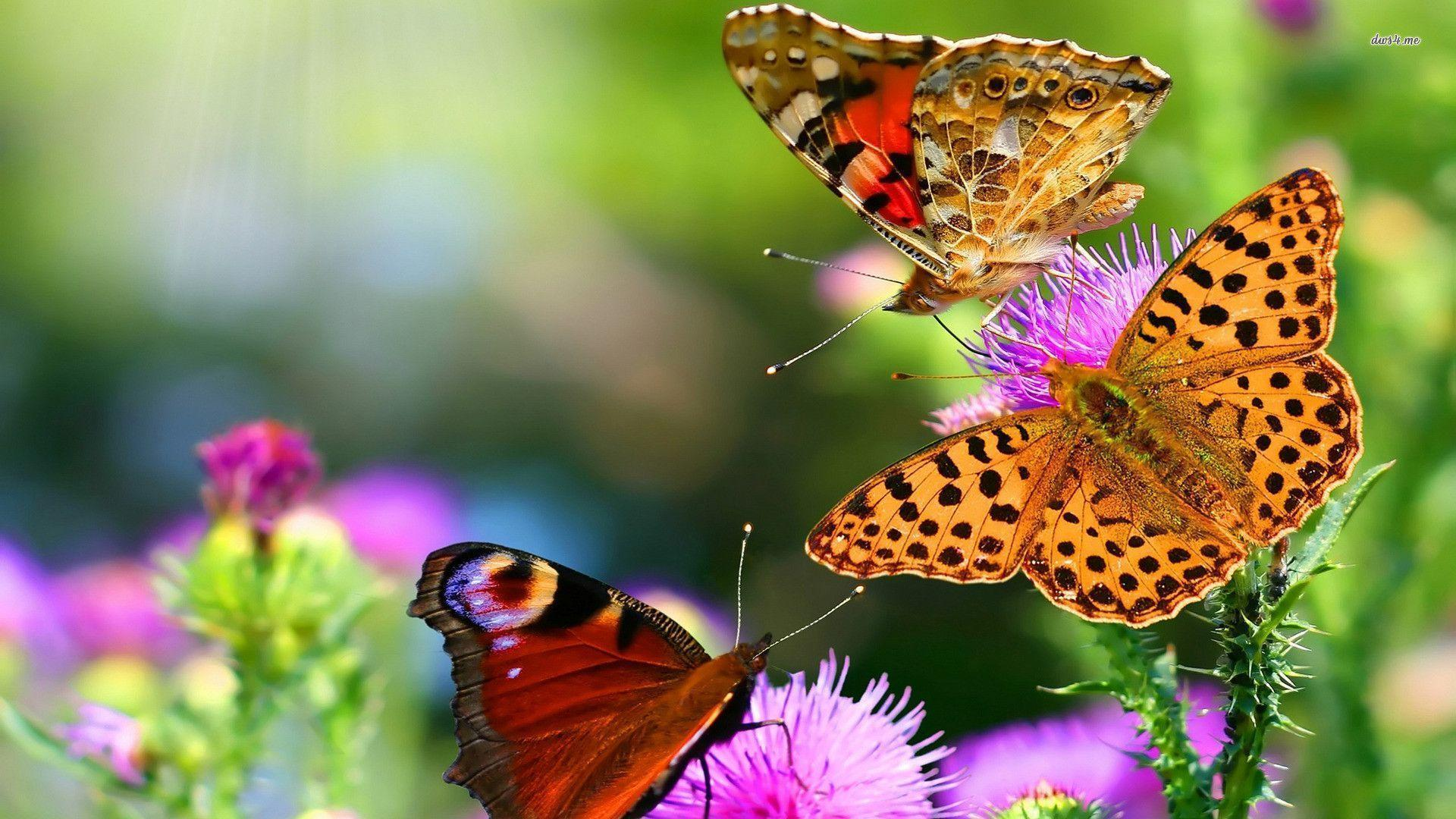 Butterfly HD Wallpapers - Wallpaper Cave