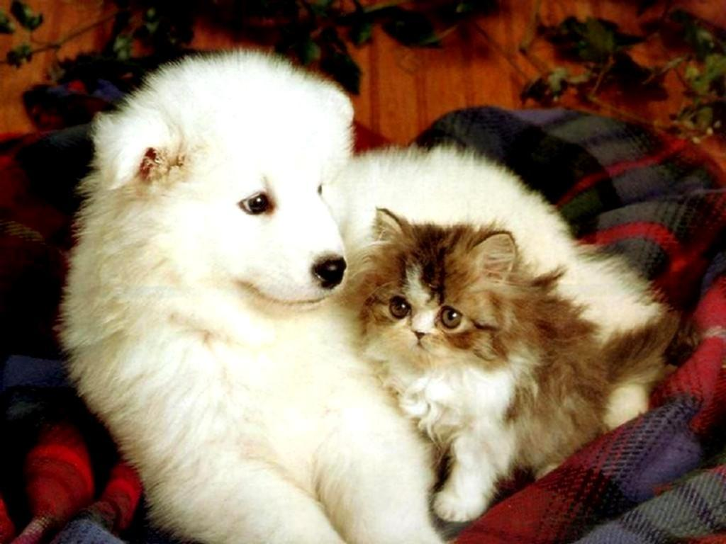 Wallpapers For > Wallpapers Of Kittens And Puppies