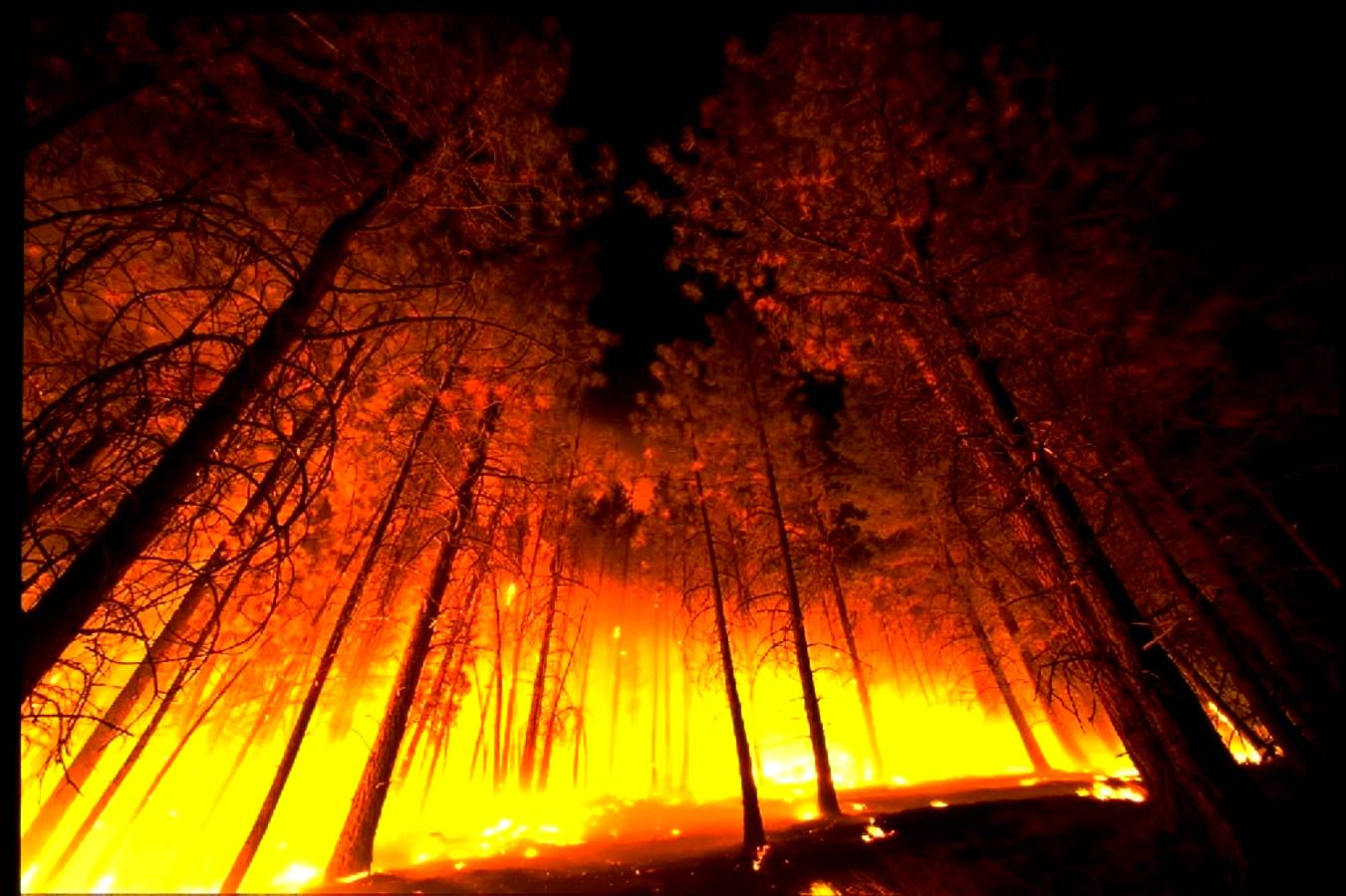 forest fire wallpapers wallpaper cave