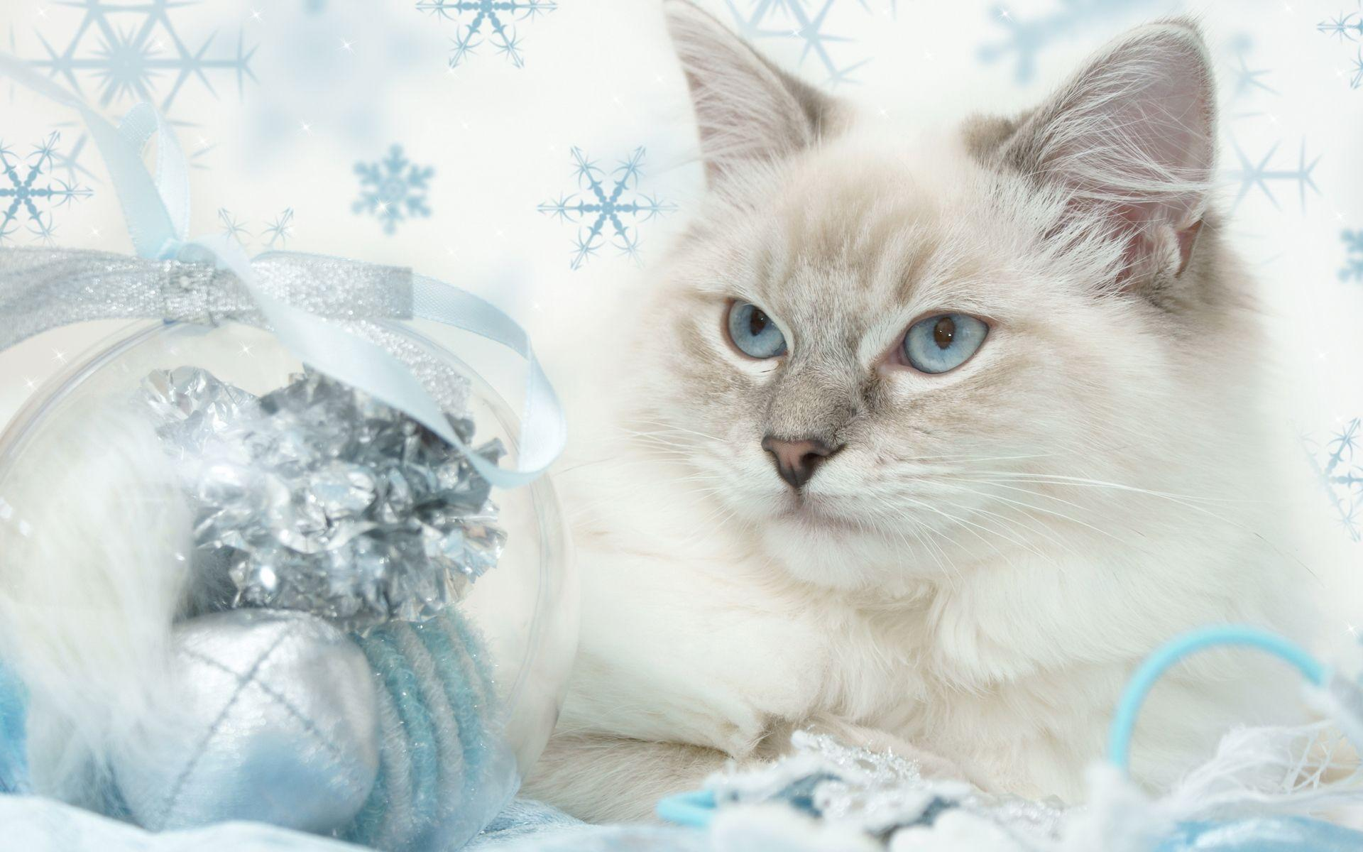 Wallpapers For > Cute Christmas Kitten Wallpaper
