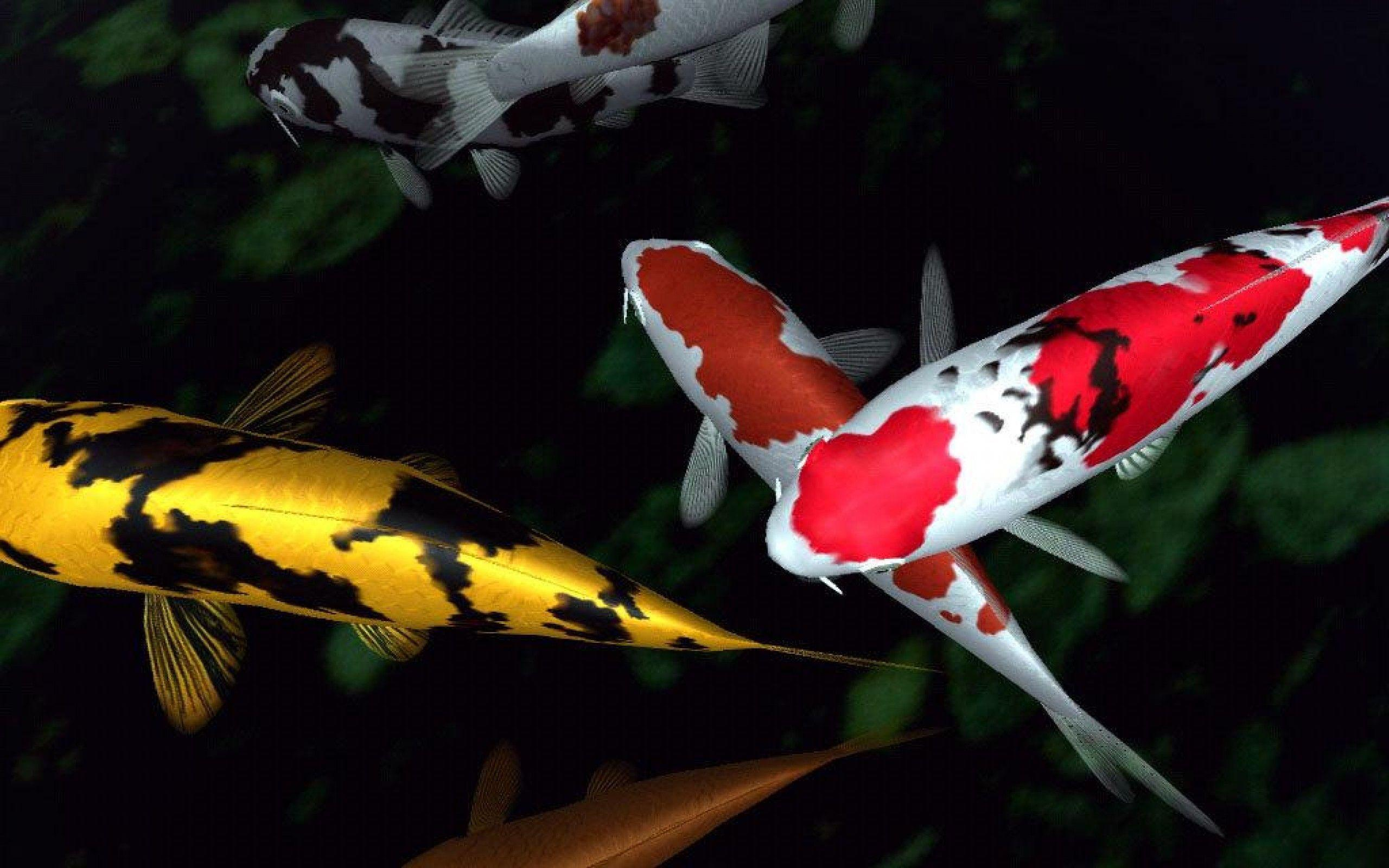 Koi fish wallpapers wallpaper cave for Large koi fish