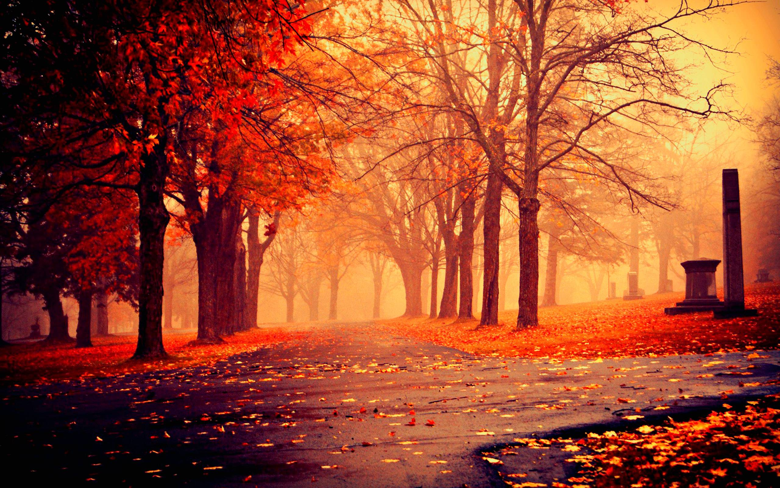Fall Definition: Fall Wallpapers