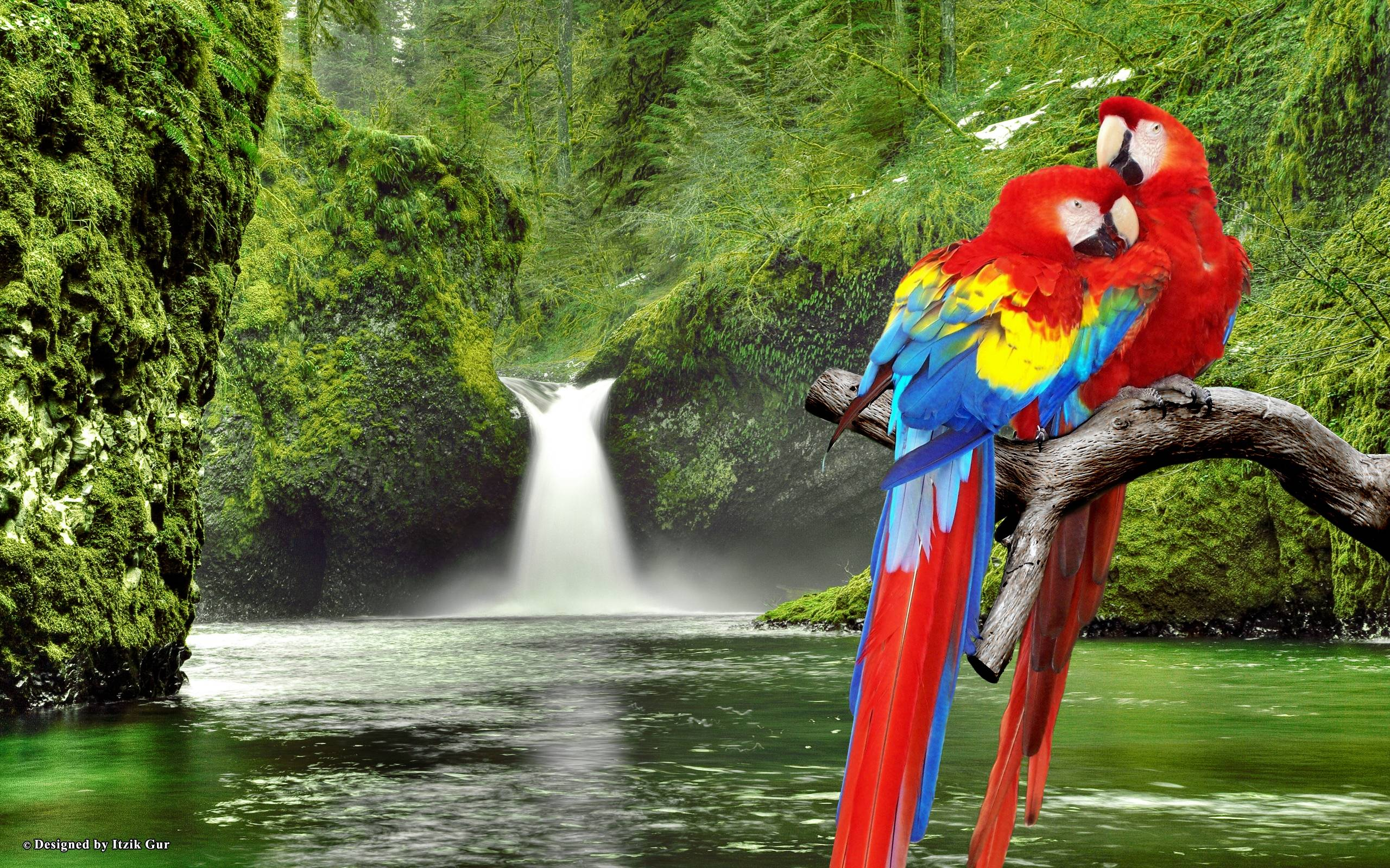 Macaw Parrots over Waterfall : Desktop and mobile wallpapers : Wallippo