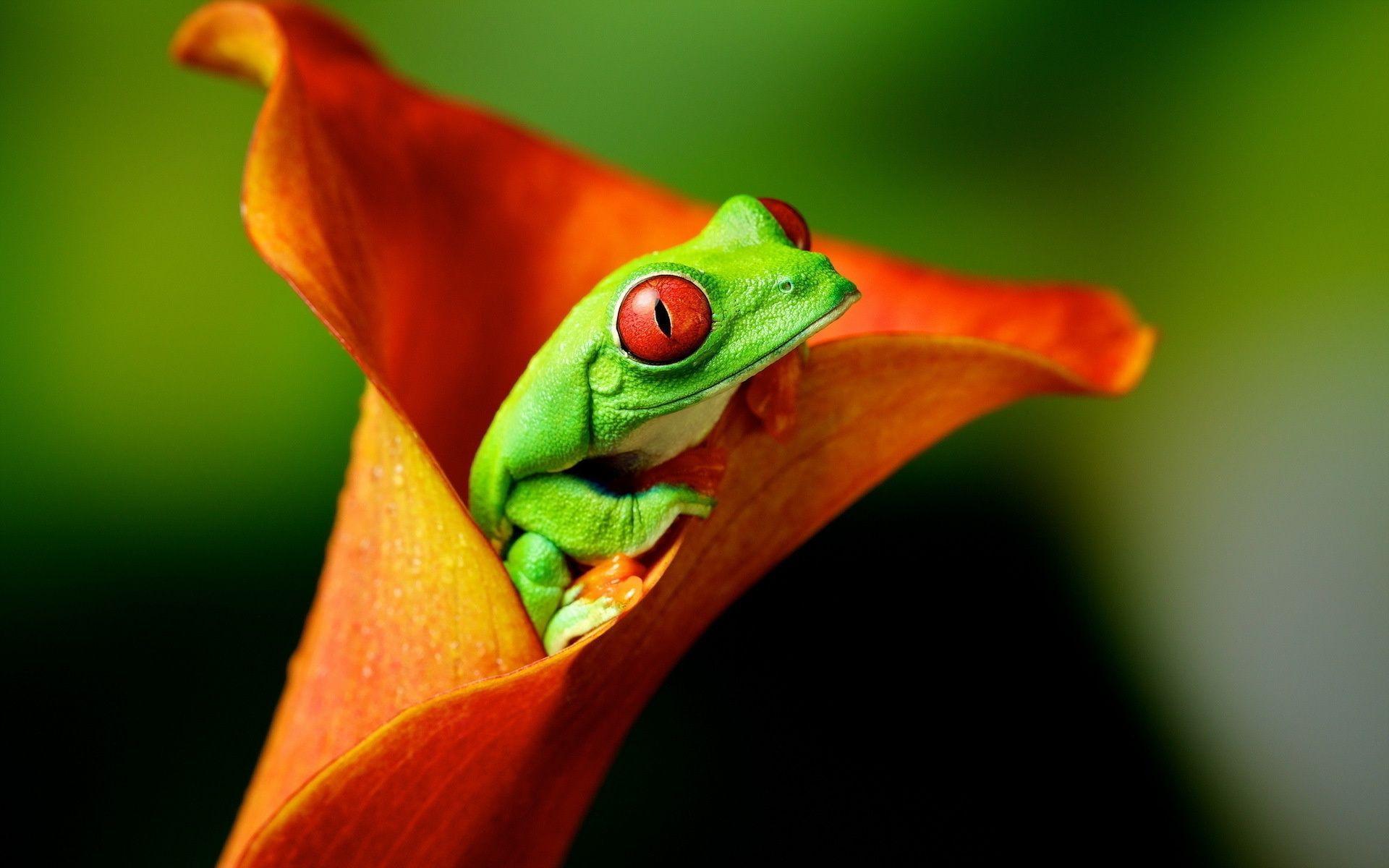 Best Frog wallpaper ideas on Pinterest My hero academia