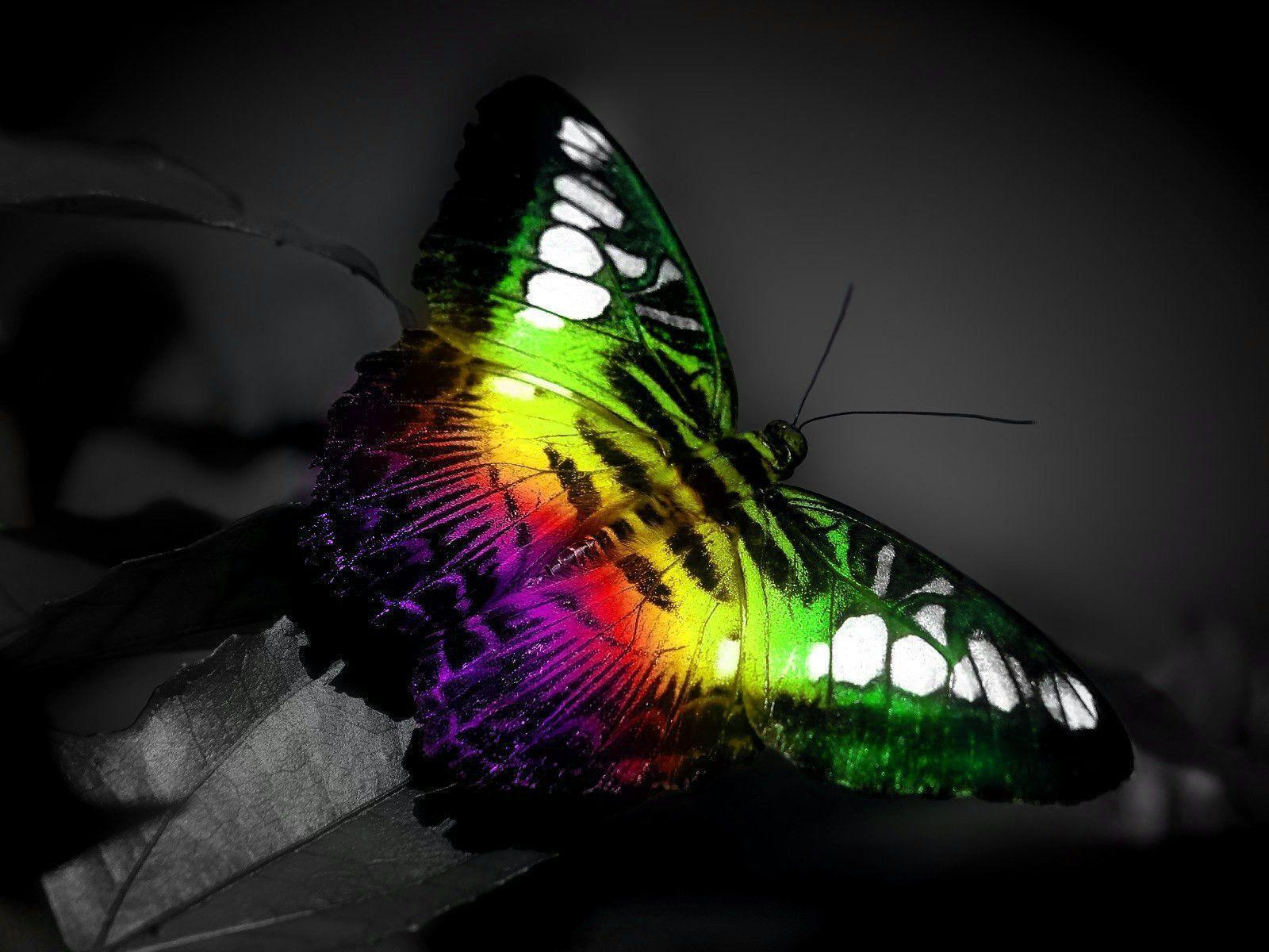 Cool Butterfly Backgrounds - Wallpaper Cave