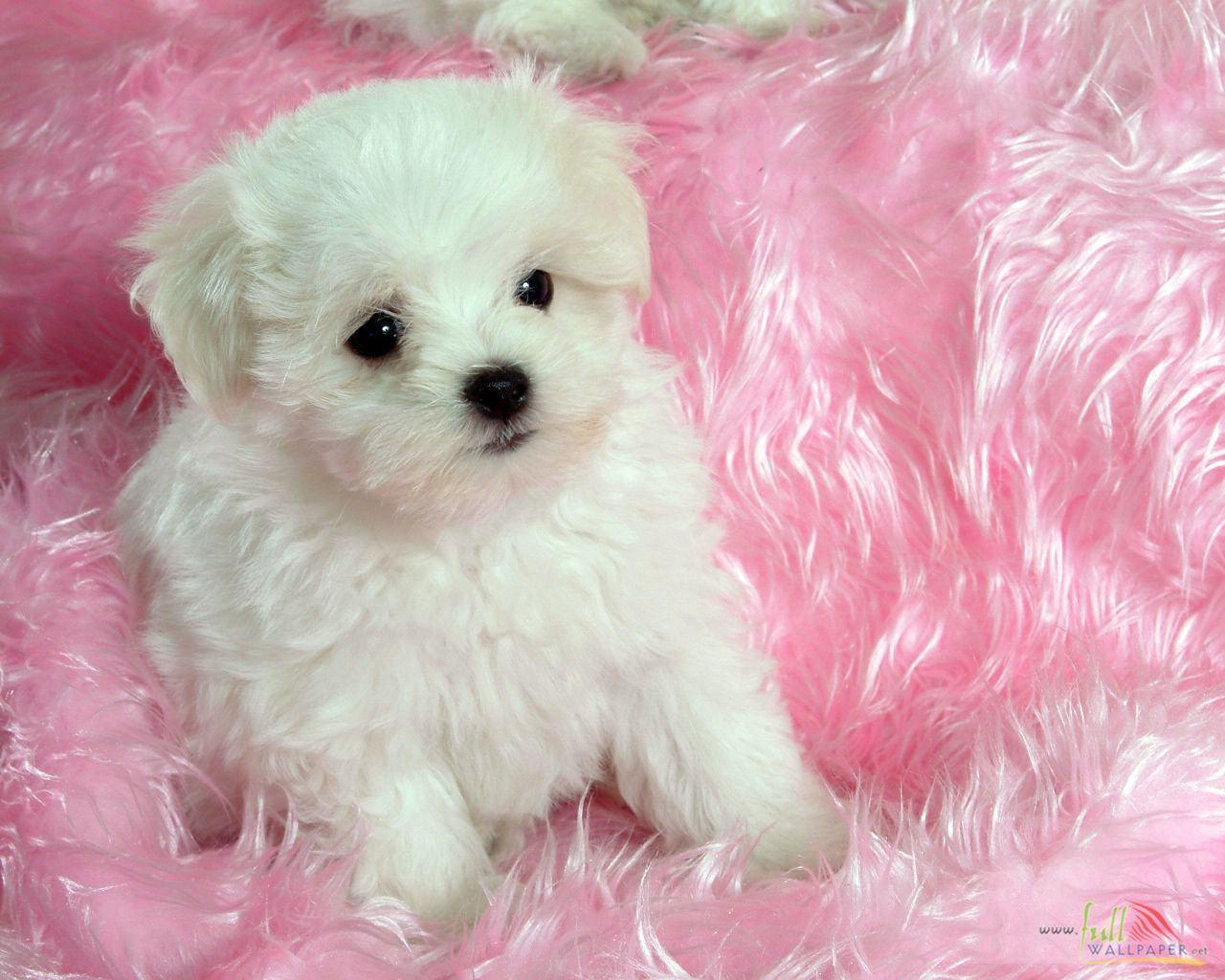 Designer Tv Shows Baby Dog Wallpapers Wallpaper Cave