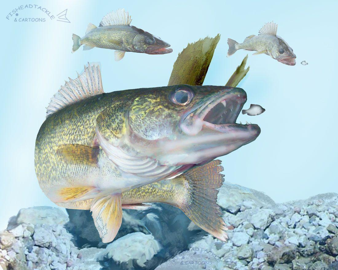 Walleye wallpapers wallpaper cave for Fishing for walleye