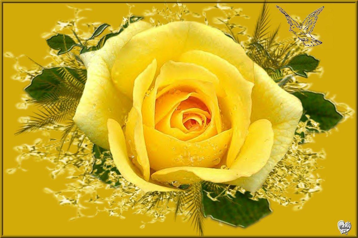 wallpaper of yellow roses - photo #9