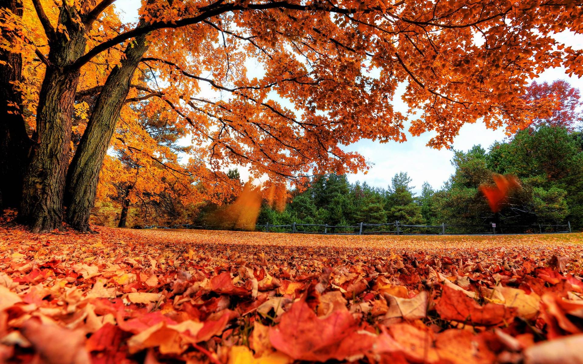 autumn leaves backgrounds wallpaper cave
