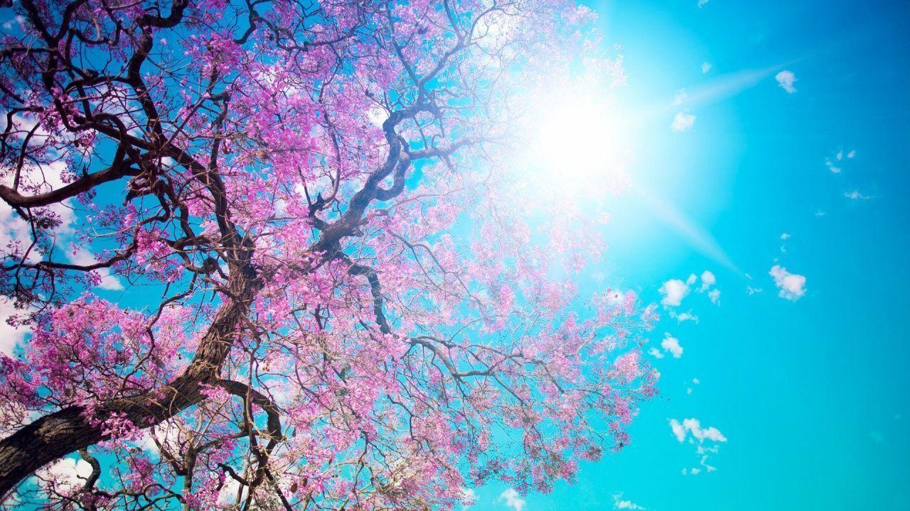 Spring Nature Image Wallpapers