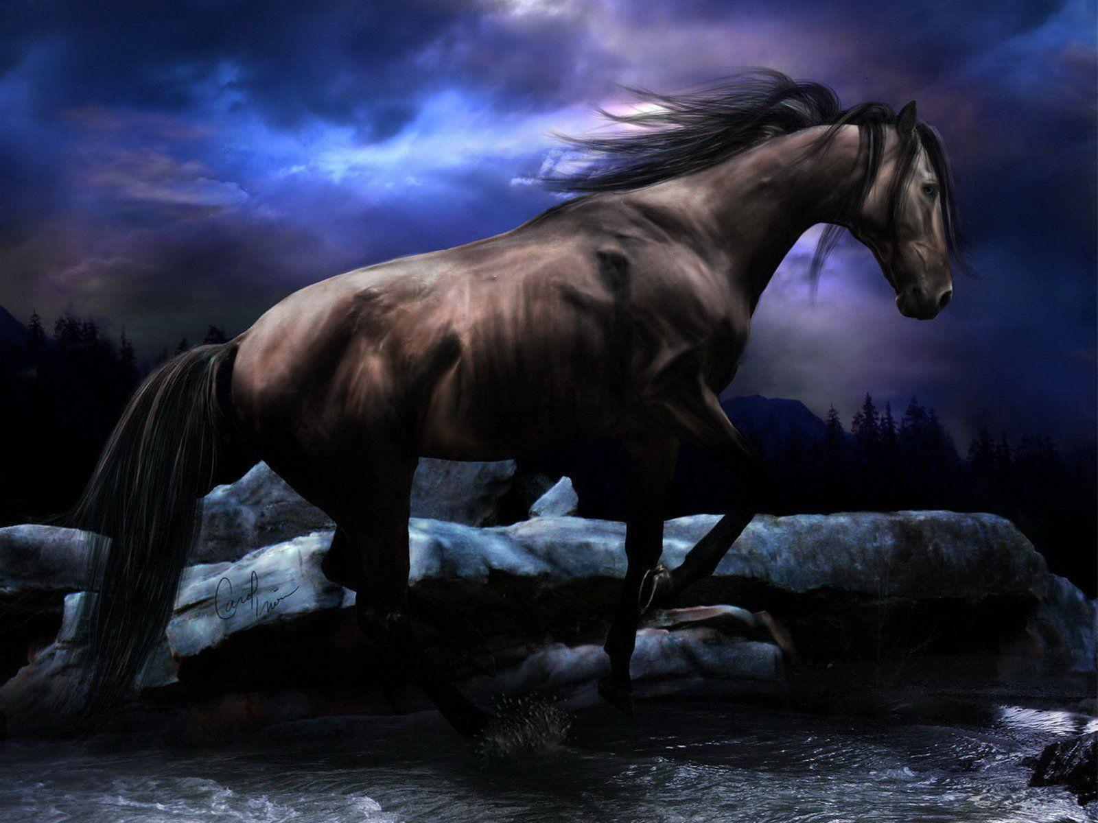 Horses HD Desktop Wallpapers for Widescreen
