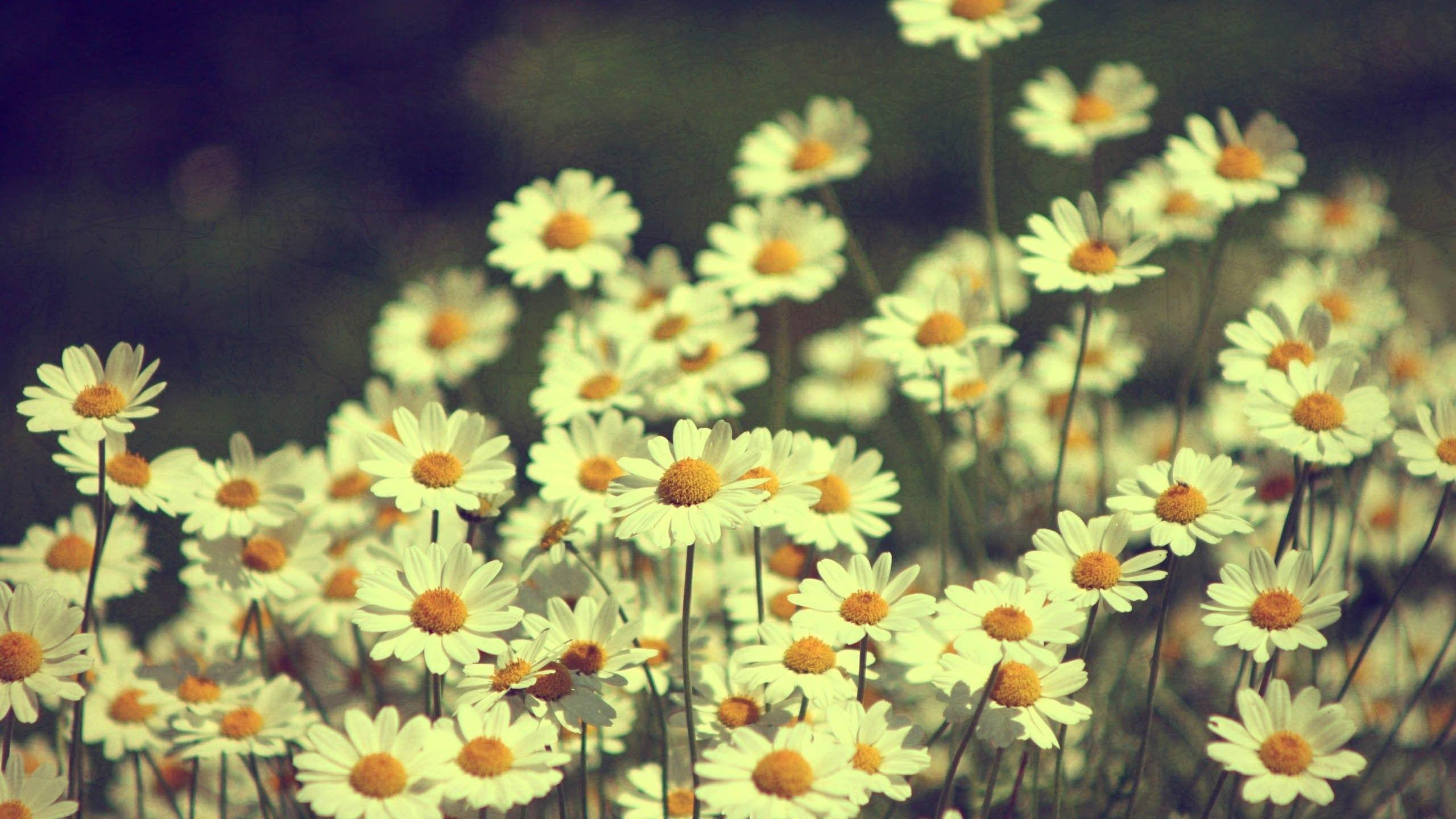Vintage Flowers Wallpapers - Wallpaper Cave Vintage Flower Background Tumblr