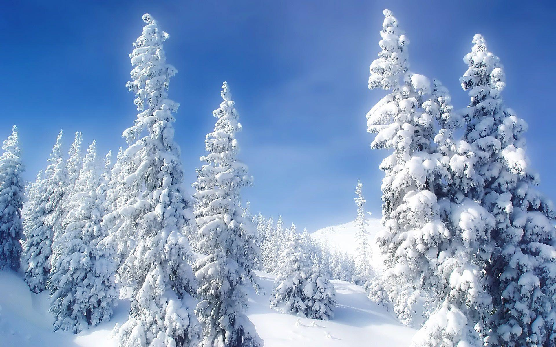 Snow Forest Wallpapers