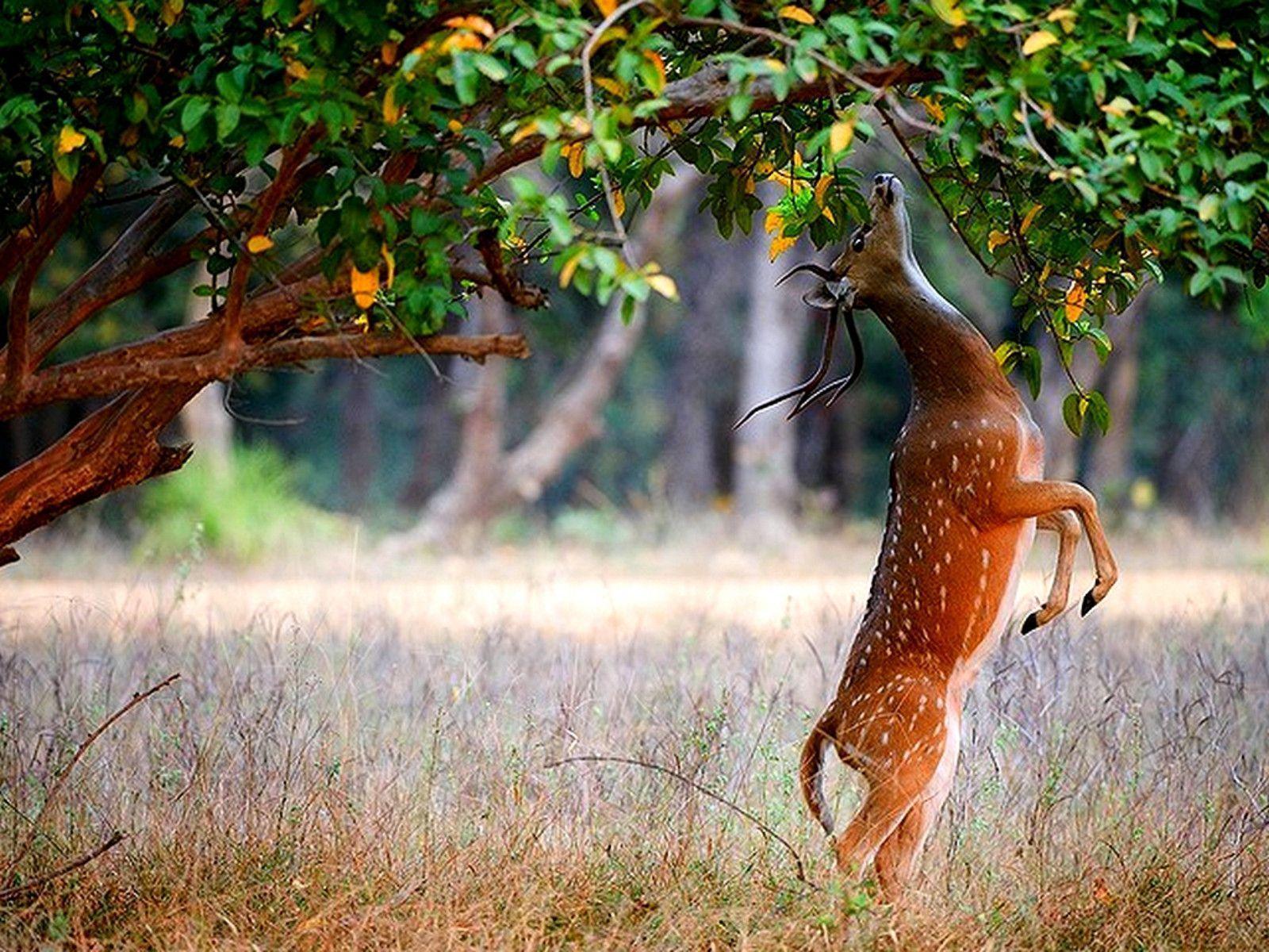 Cool Hunting Wallpapers HD Deer For Desktop Backgrounds