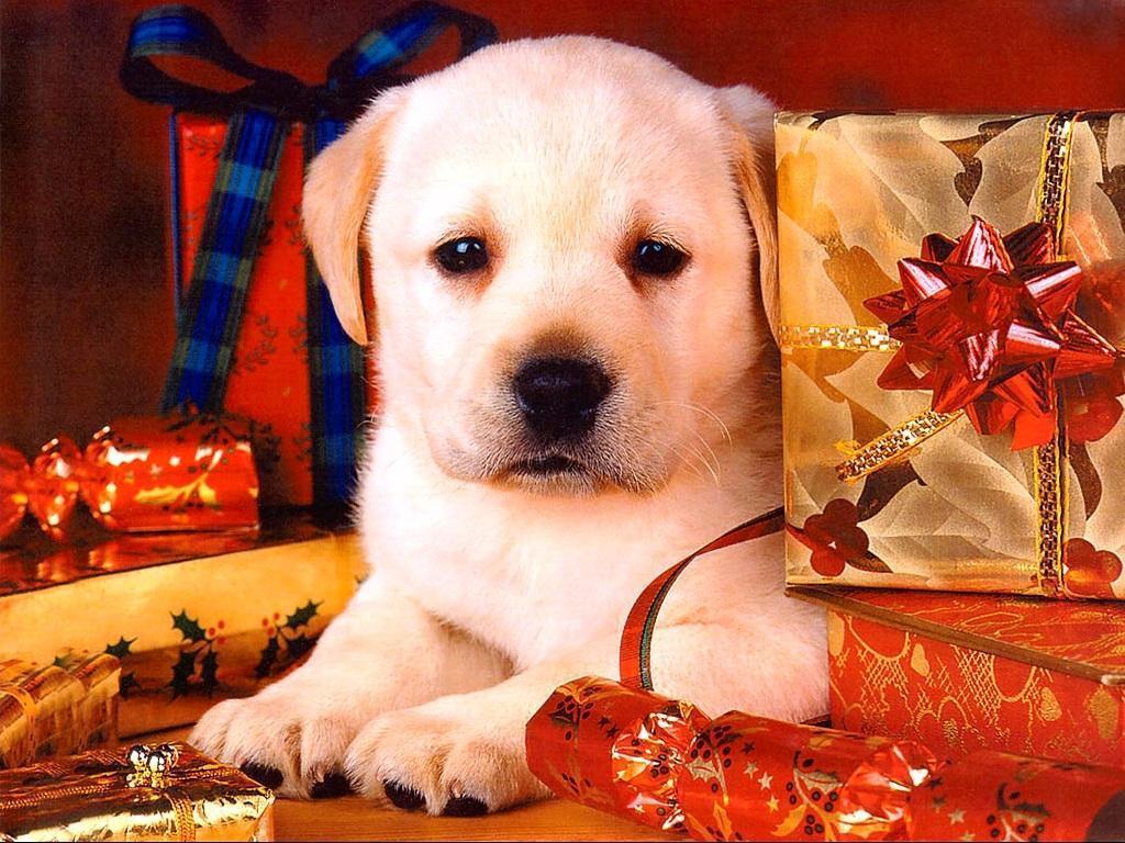 christmas puppy wallpaper - photo #9