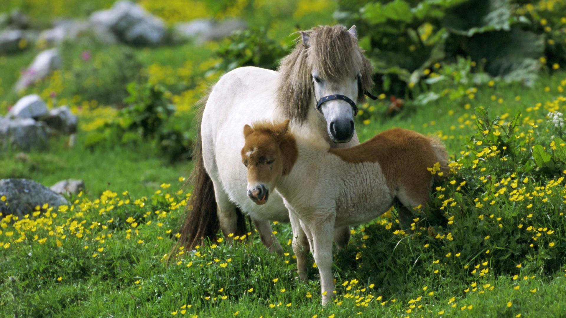 Cute Horse Cub | Animals Wallpapers