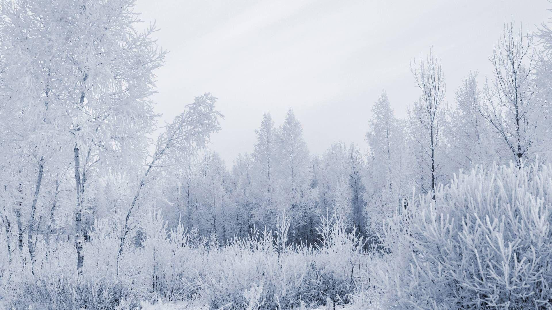 snowy nature wallpaper - photo #18