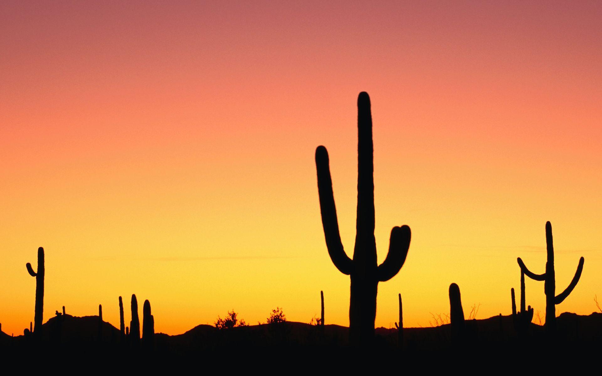 desert wallpaper cactus hd - photo #10