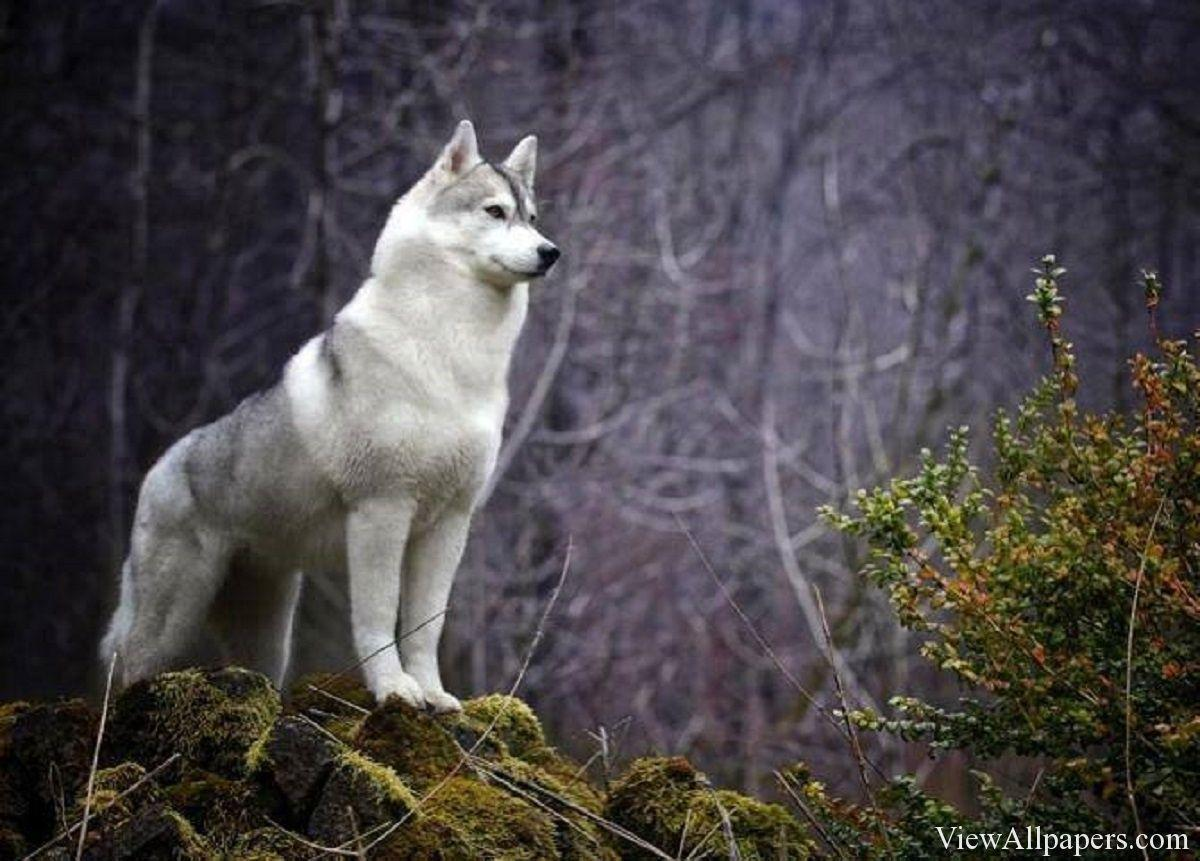 Aninimal Book: Animal Planet Wallpapers - Wallpaper Cave