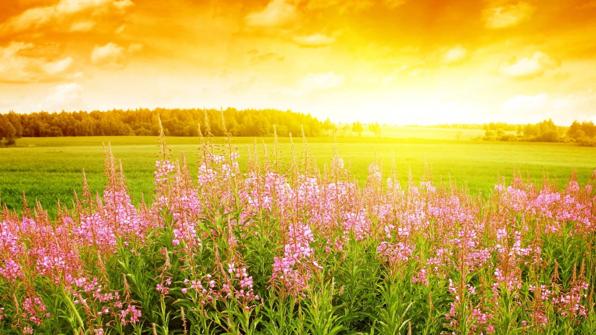 Summer Flowers In Season Wallpaper Background 1 HD Wallpapers ...