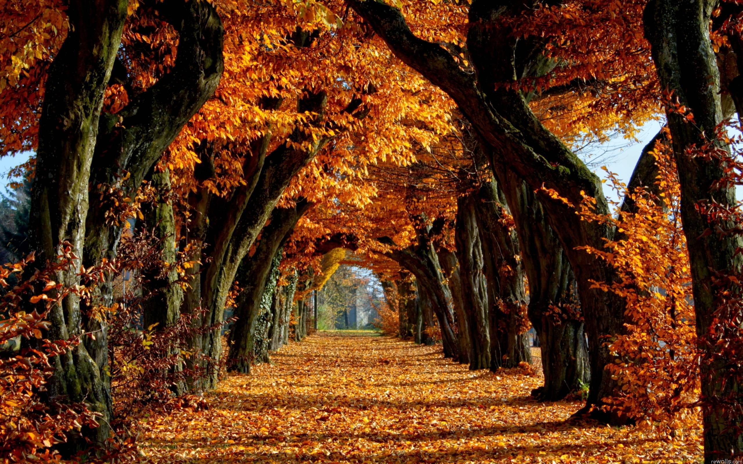 Hd Wallpaper Nature Fall 3