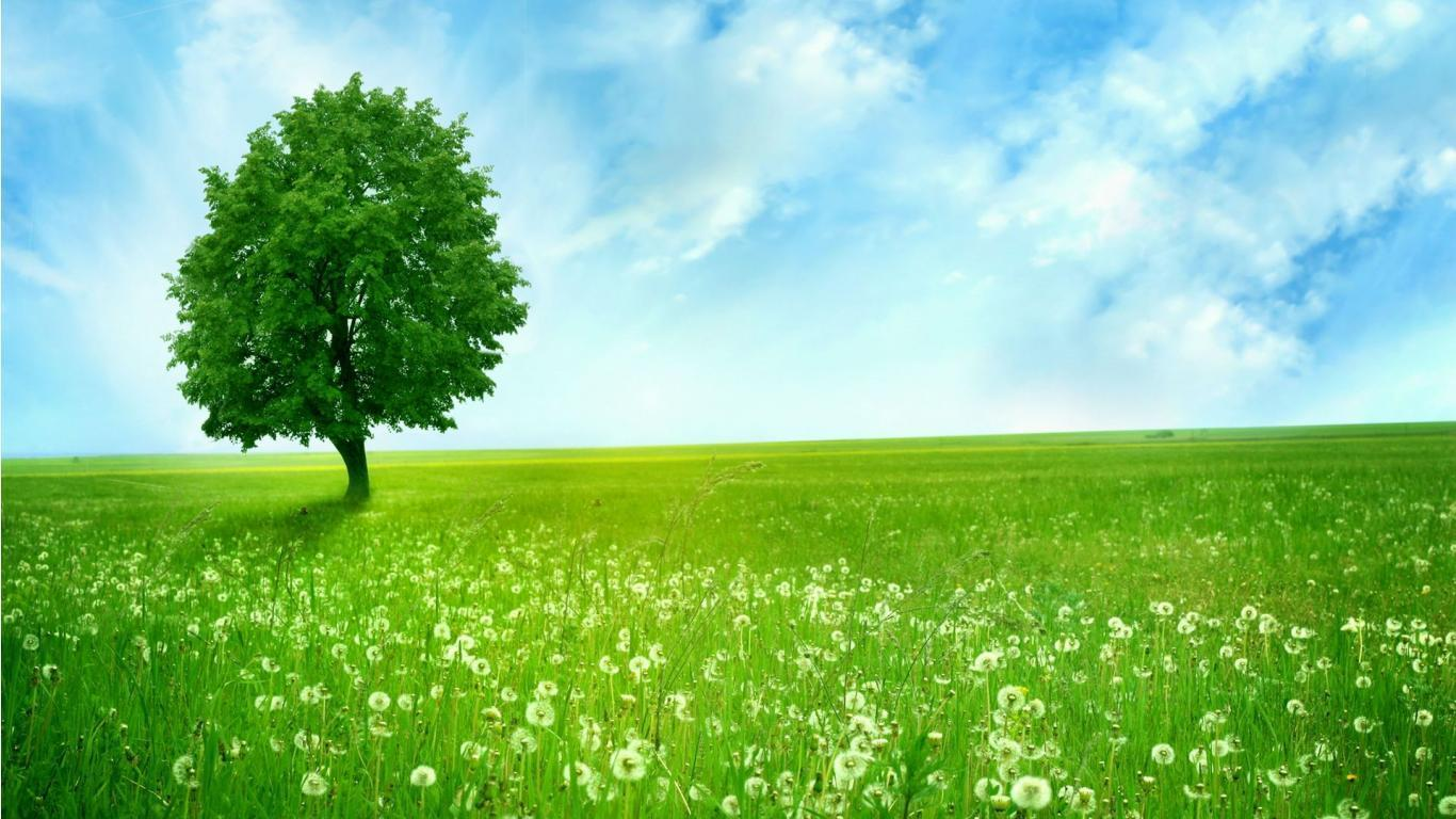 green nature wallpapers hd for desktop free download