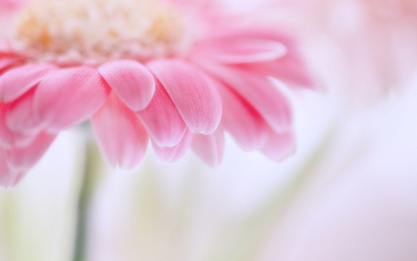 light pink flower wallpapers - wallpaper cave
