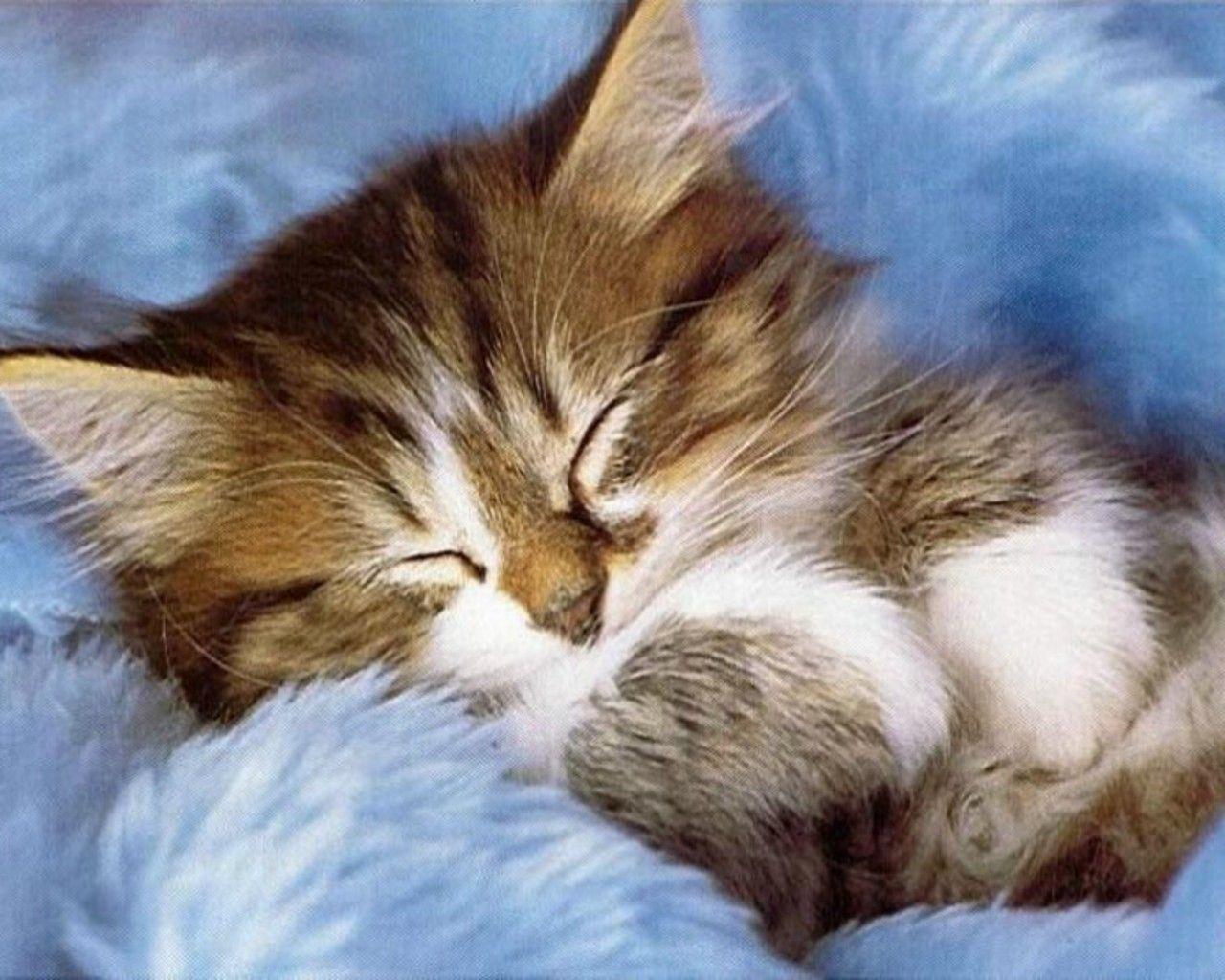 Free Cute Kitten Wallpapers Wallpaper