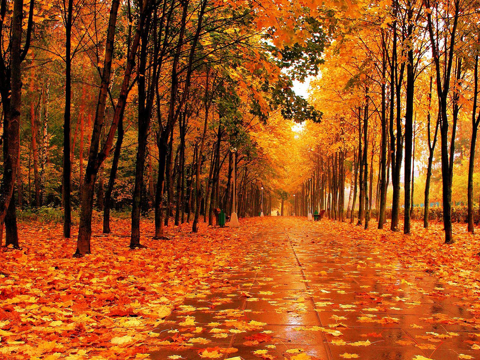 Fall Pictures For Wallpapers - Wallpaper Cave