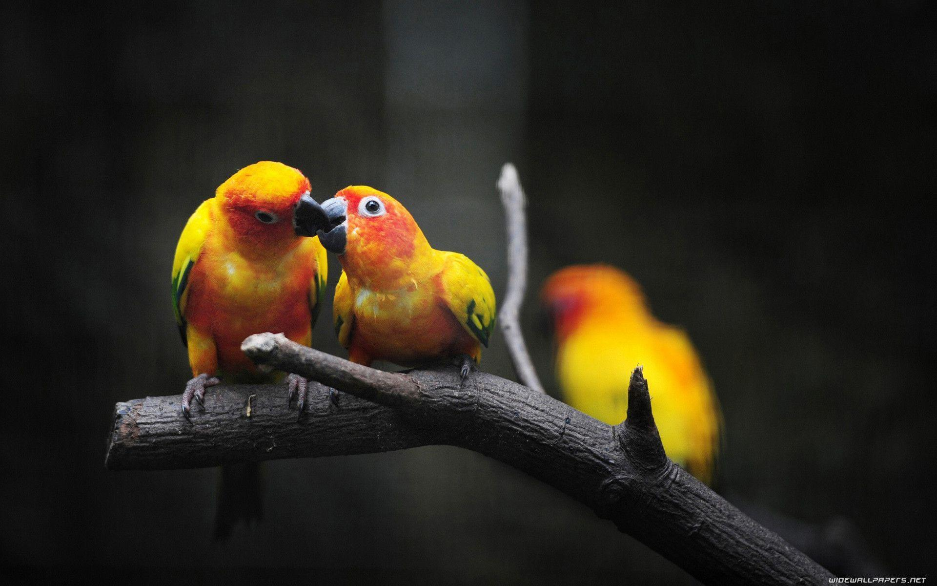 Love Birds Wallpapers - Wallpaper cave