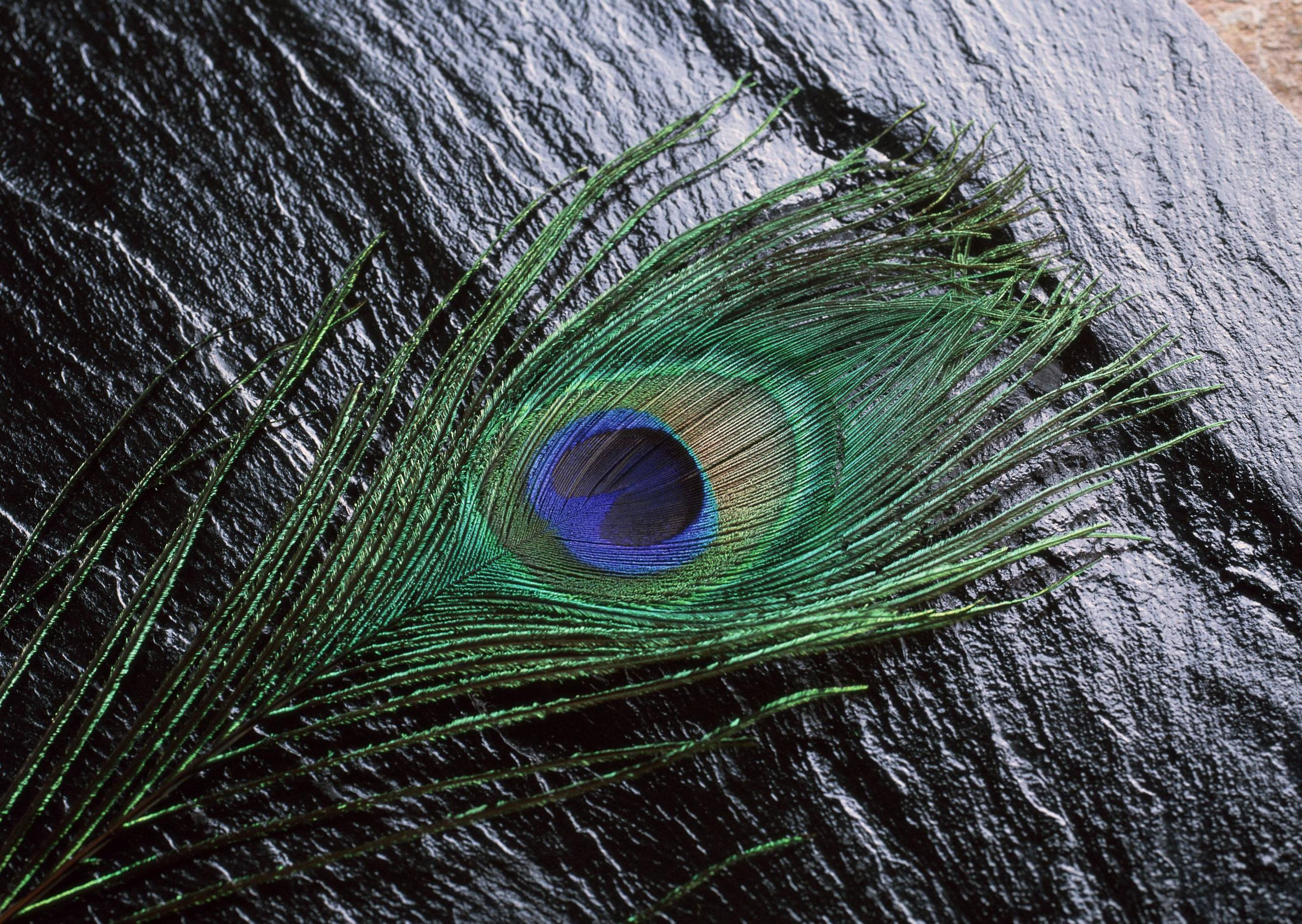 Mor Pankh Hd Wallpaper: Wallpapers Of Peacock Feathers HD 2015
