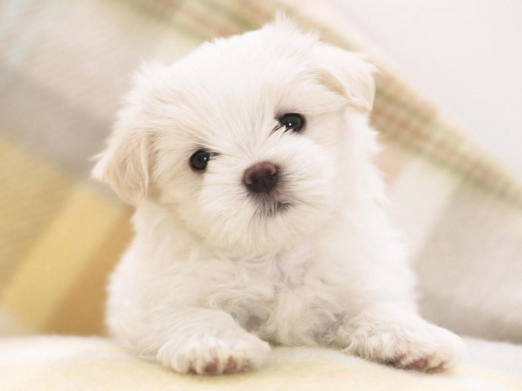 Cute Dog Desktop Wallpapers
