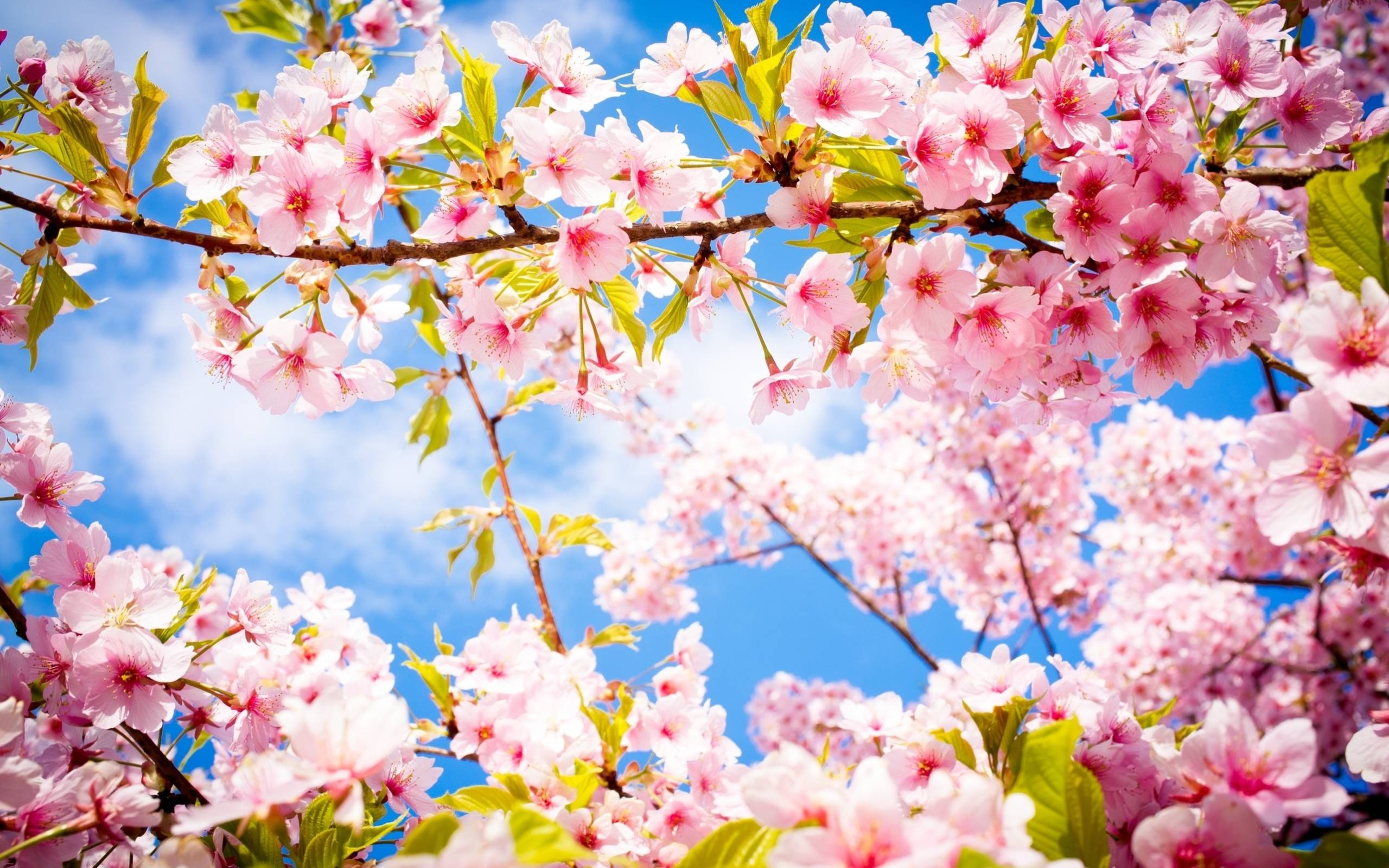 Beautiful Spring Pictures beautiful spring wallpapers - wallpaper cave