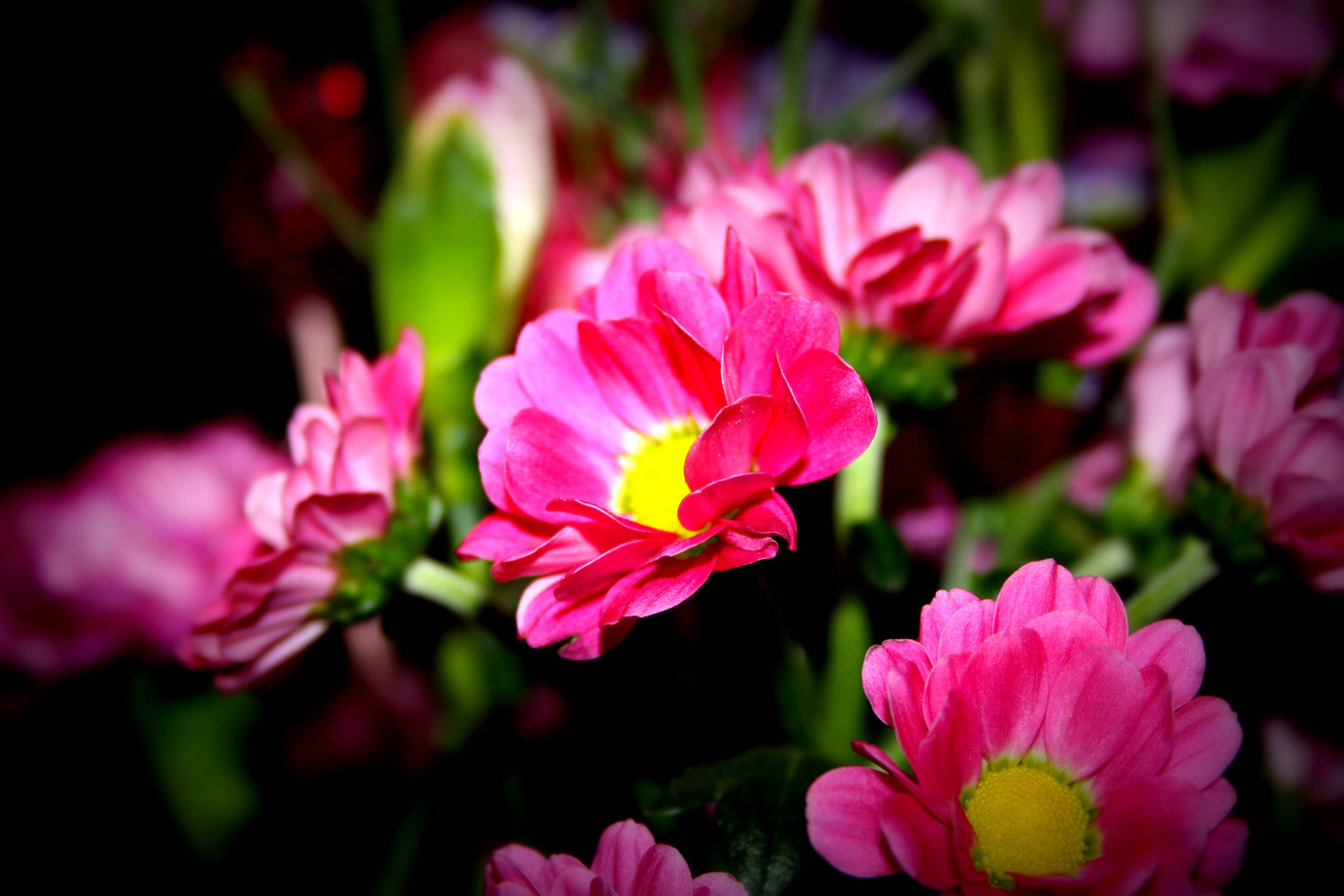 flower wallpapers widescreen space - photo #2