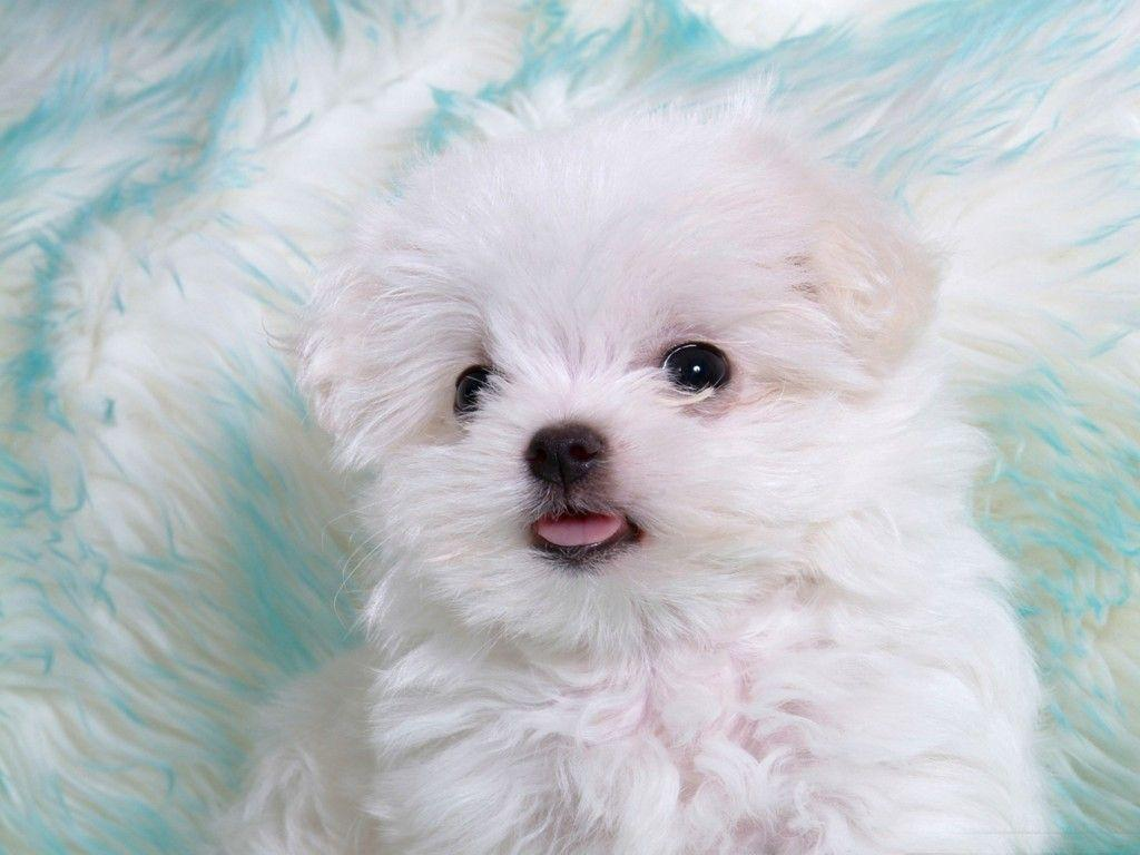 Wallpapers For > Cute Dog Wallpapers For Ipad