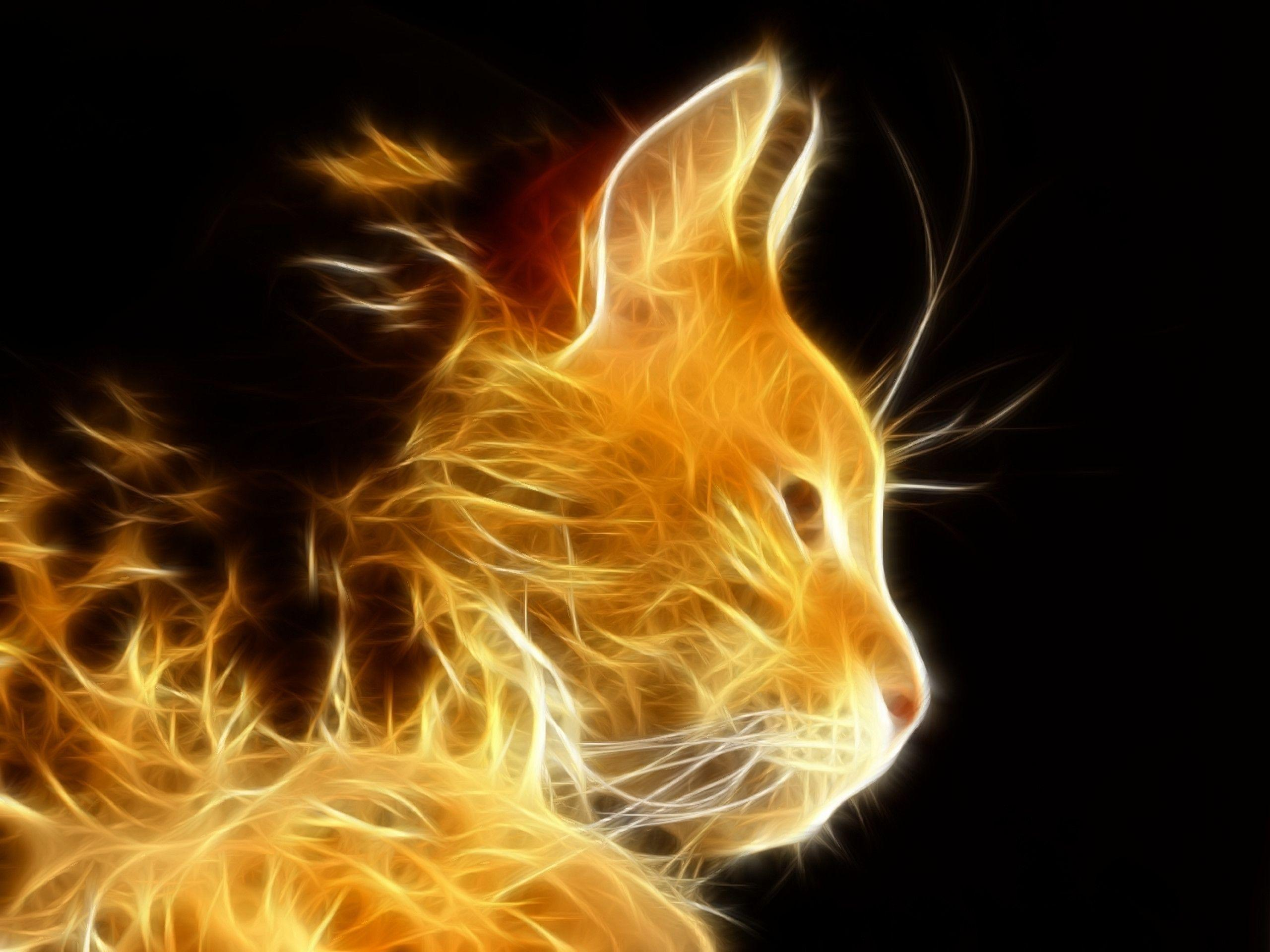Cool cat backgrounds wallpaper cave for Immagini desktop 1366x768