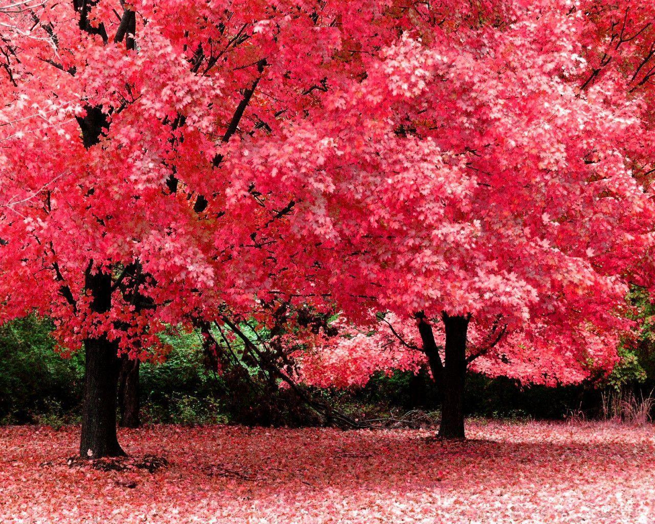 Desktop hintergrund pink