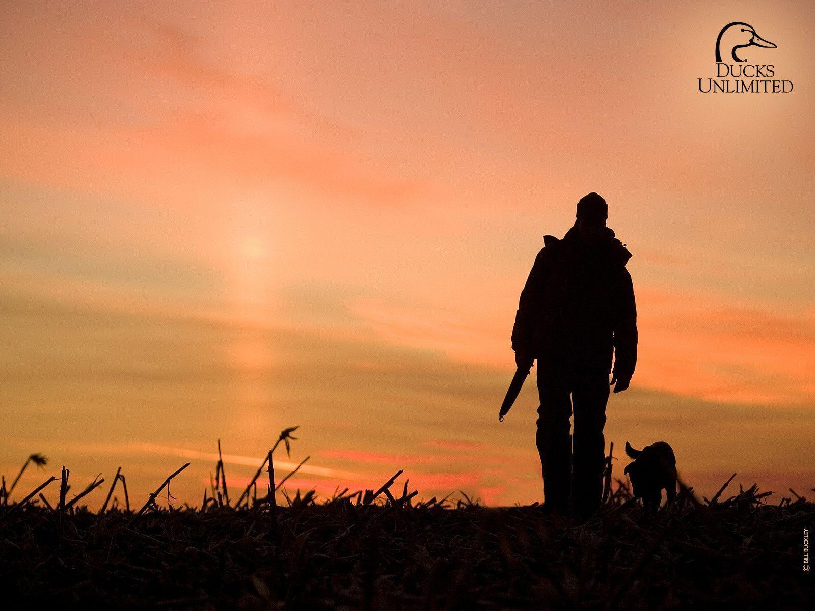 Hunting Dog Wallpapers