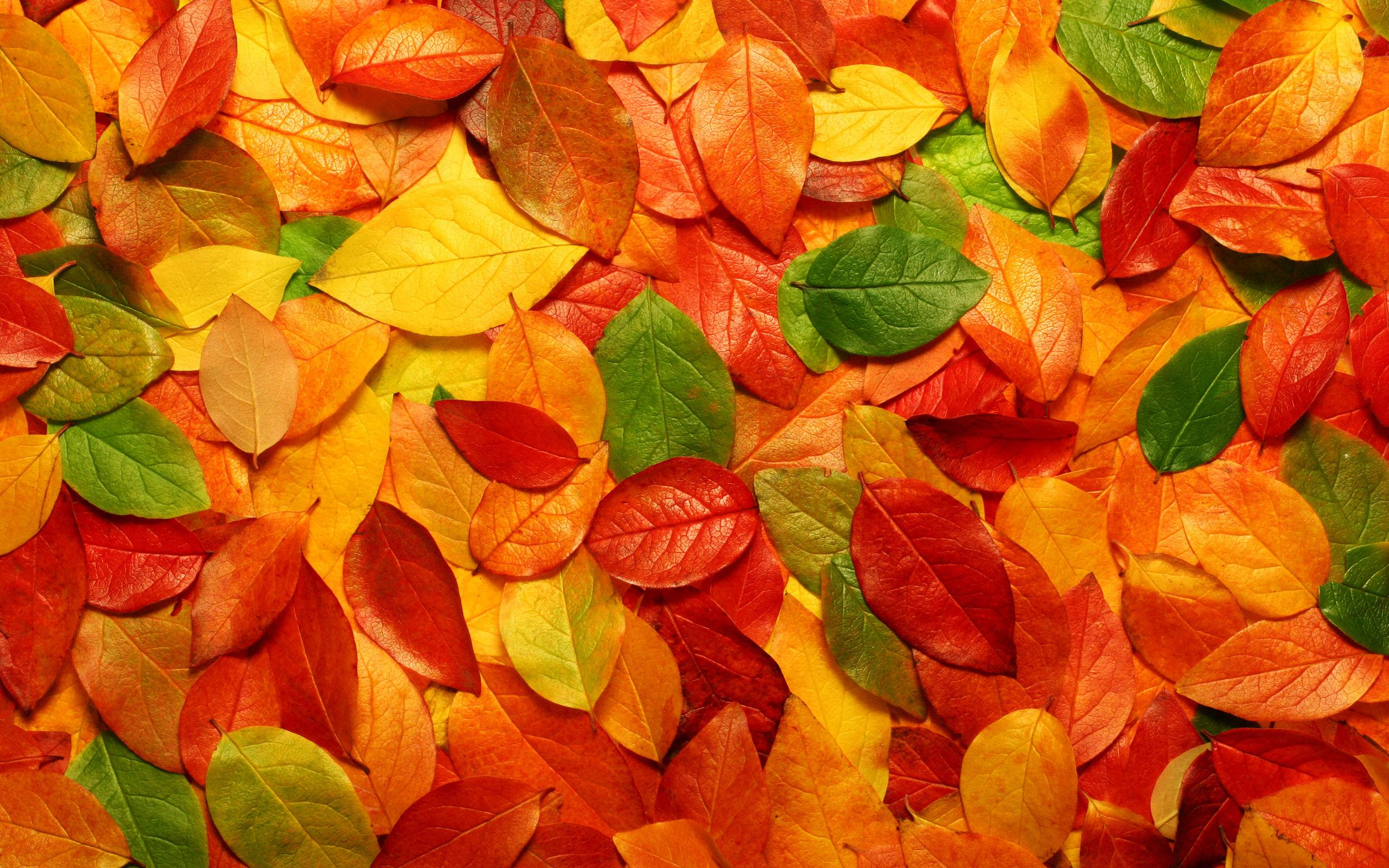 wallpapers for autumn leaves desktop wallpaper