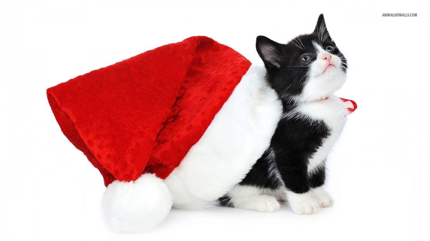 Christmas kitten wallpaper #