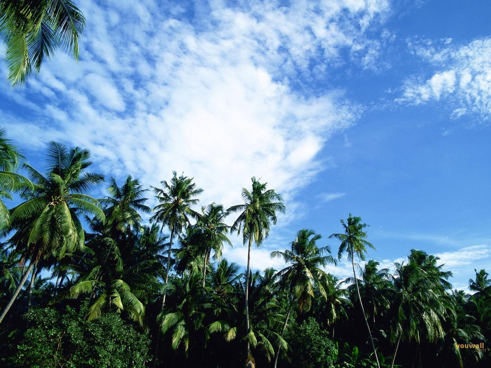 tropical jungle wallpaper - photo #36