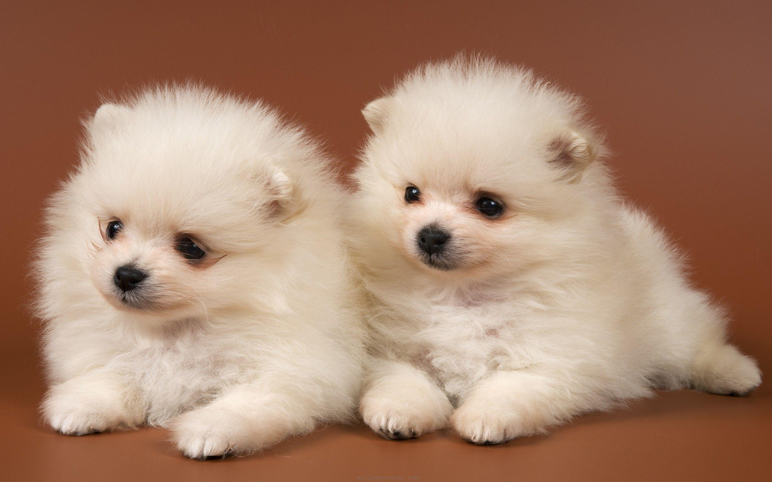 Cute Puppy Dogs Wallpapers Image & Pictures