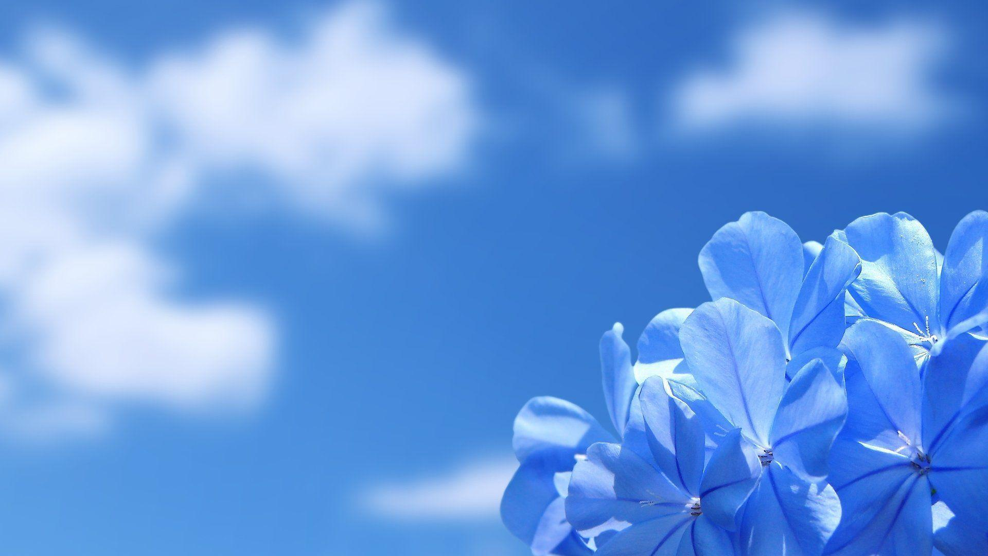 Desktop Wallpapers HD Flowers | High Definition Wallpapers