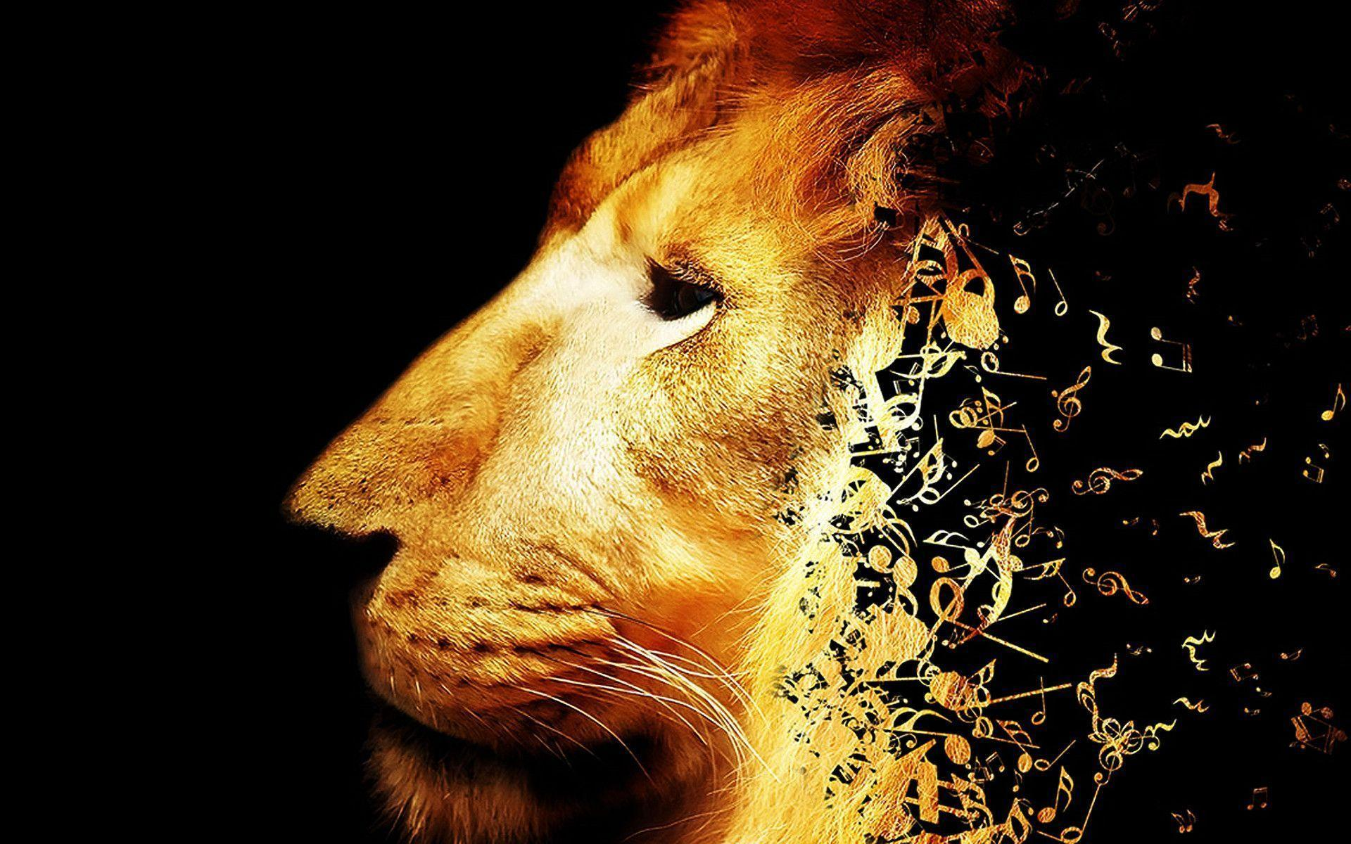 lion pictures wallpapers wallpaper cave