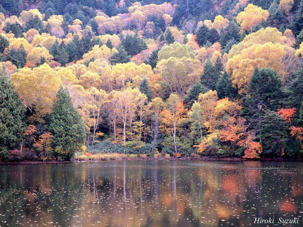 Autumn scenes wallpapers wallpaper cave - Pics of fall scenes ...