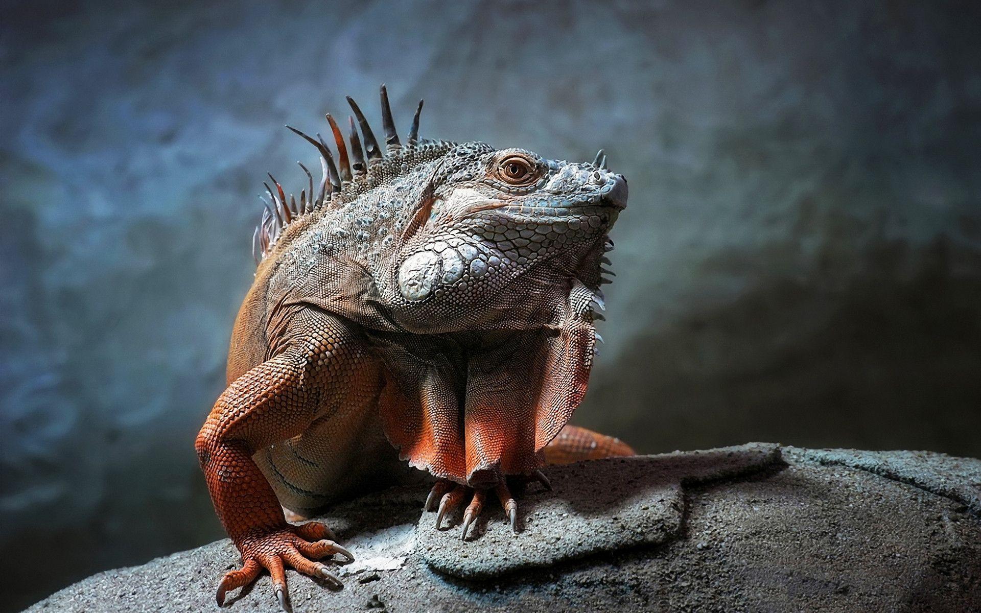 H D Reptiles Reptile Wallpap...