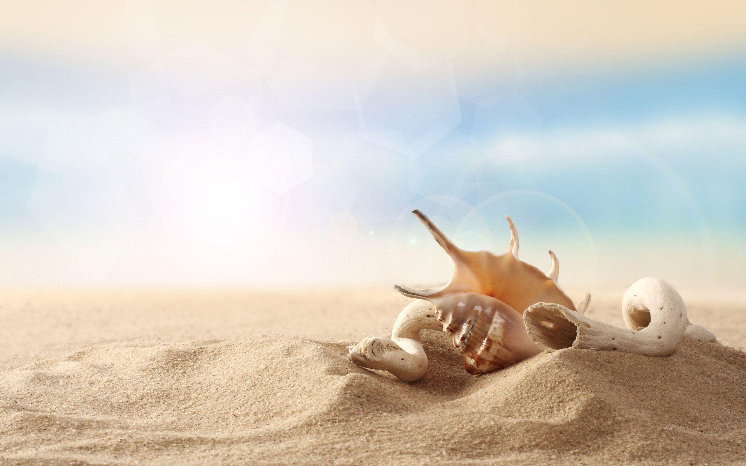 Download Seashell Sand Wallpapers 17111 2560x1600 px High